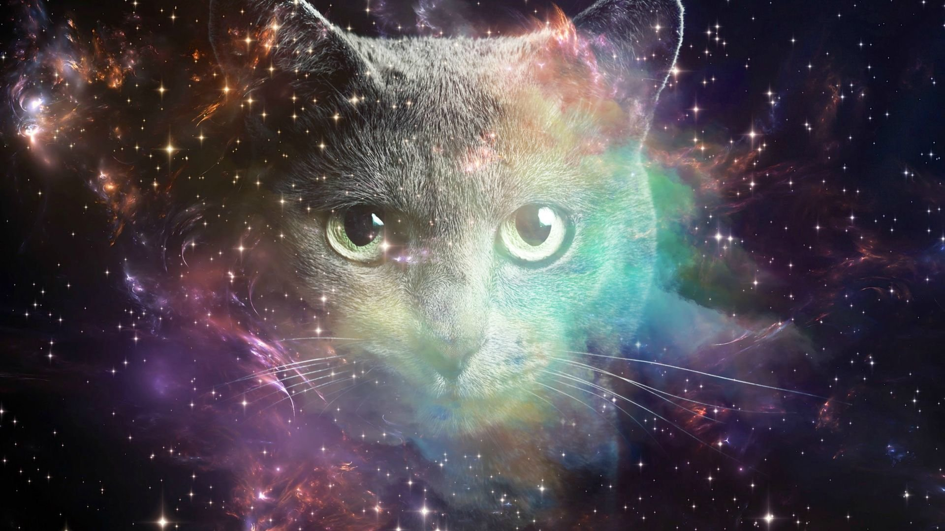 Cats in space wallpaper ipad