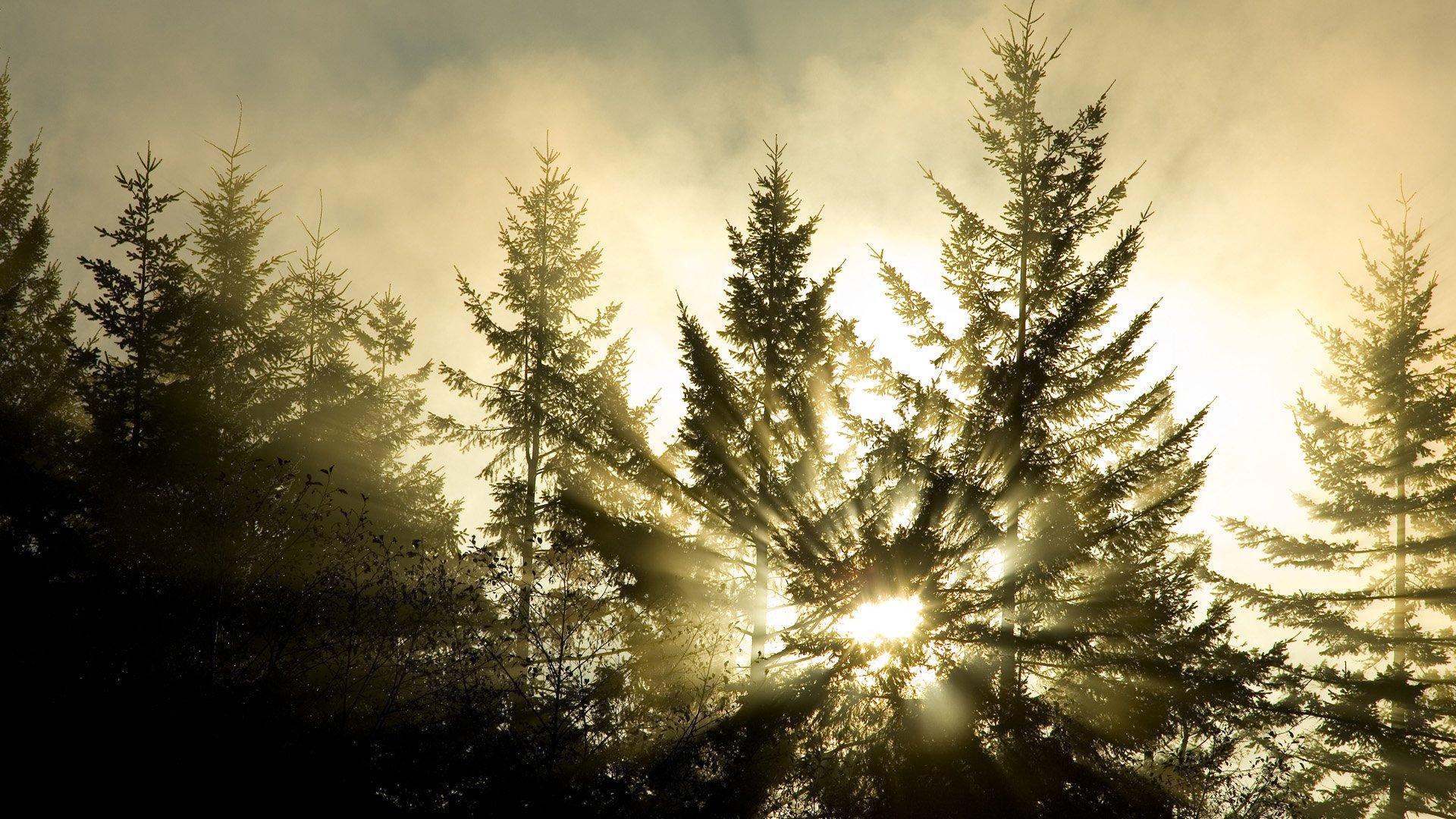 Лучи лес деревья  № 3847412 без смс