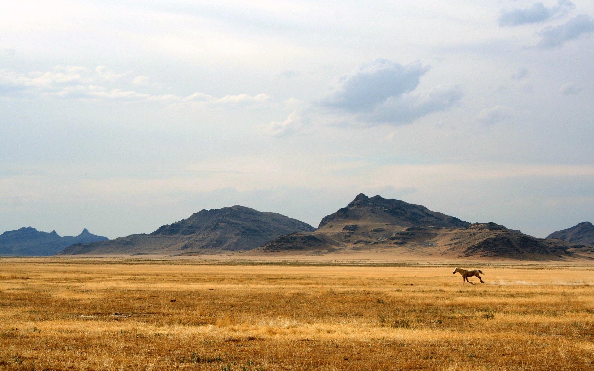 Running Wild Horse Landscape Hd Wallpaper