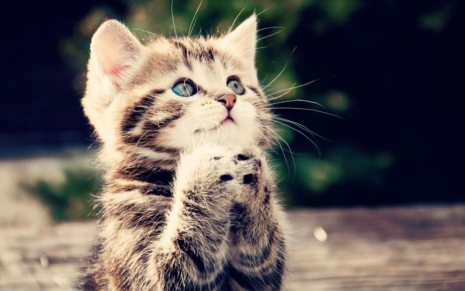Animals Cat Kitten Cute Begging Kitten Hd Wallpaper