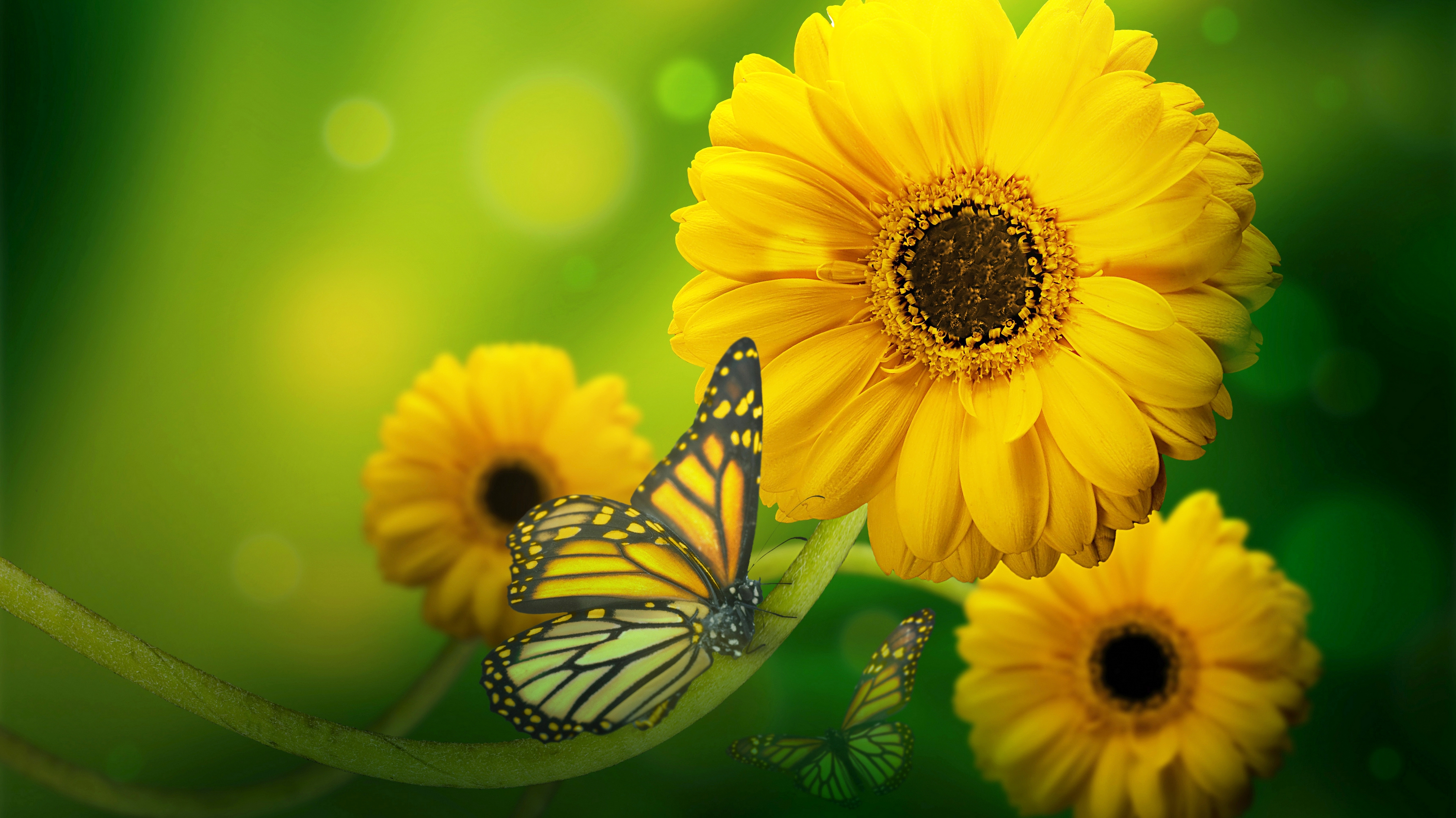 Yellow Flowers With Butterfly 4k Wallpaper