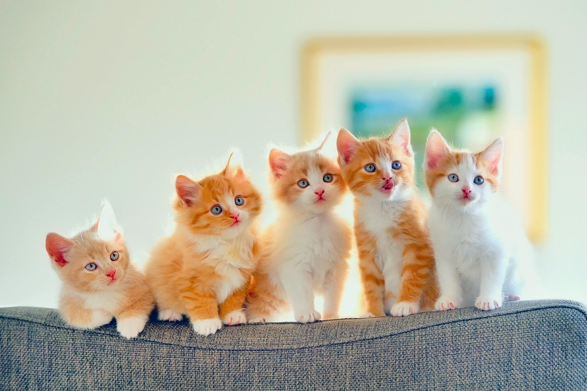 5 Cute Kittens HD Wallpaper