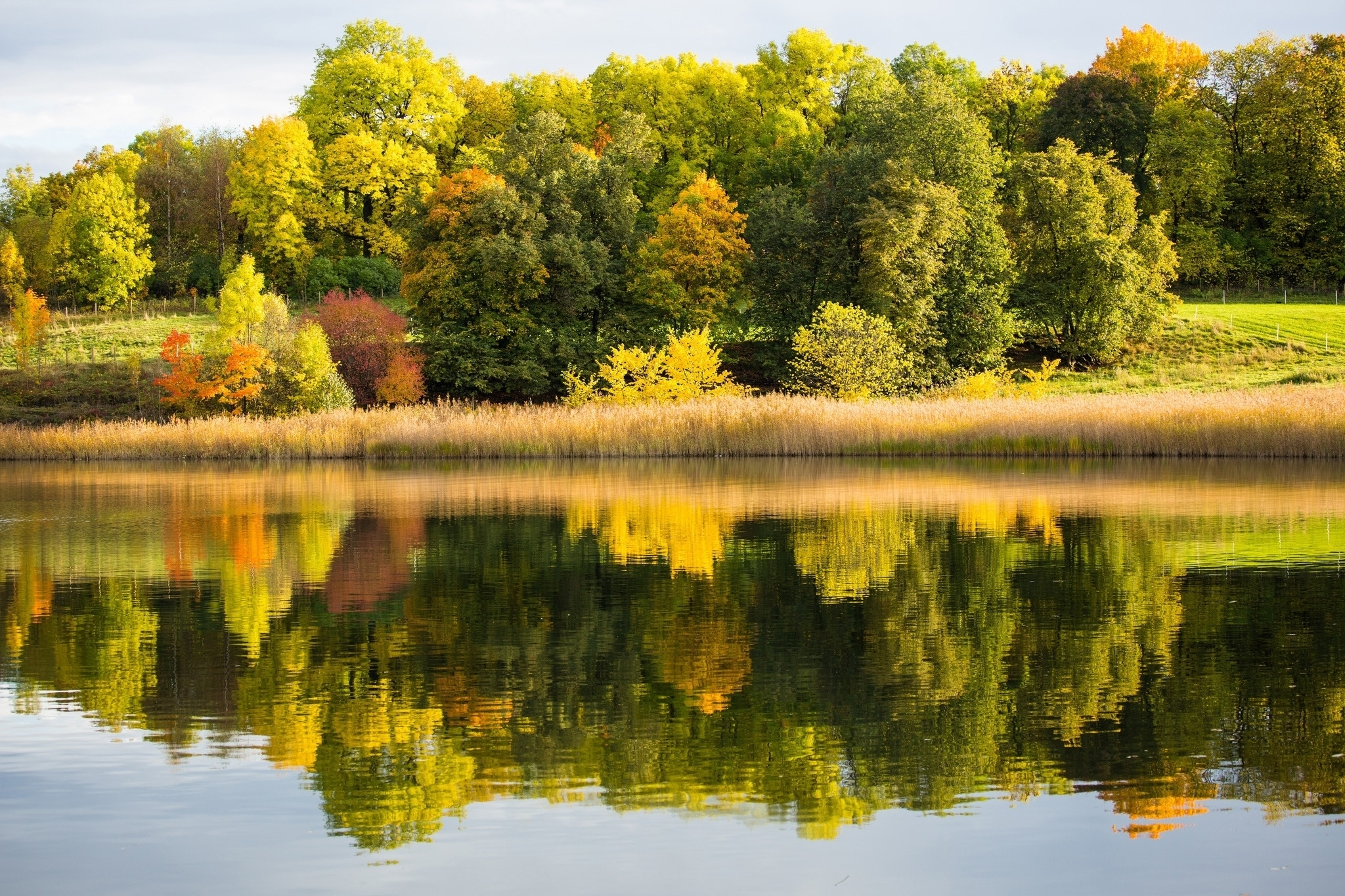 Green Lake View With Trees Hd Wallpaper