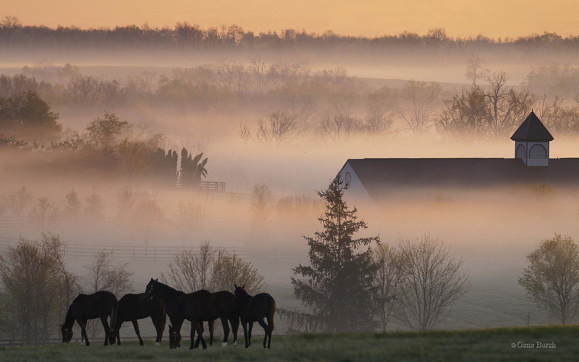 ranch prompt hd desktop - photo #25