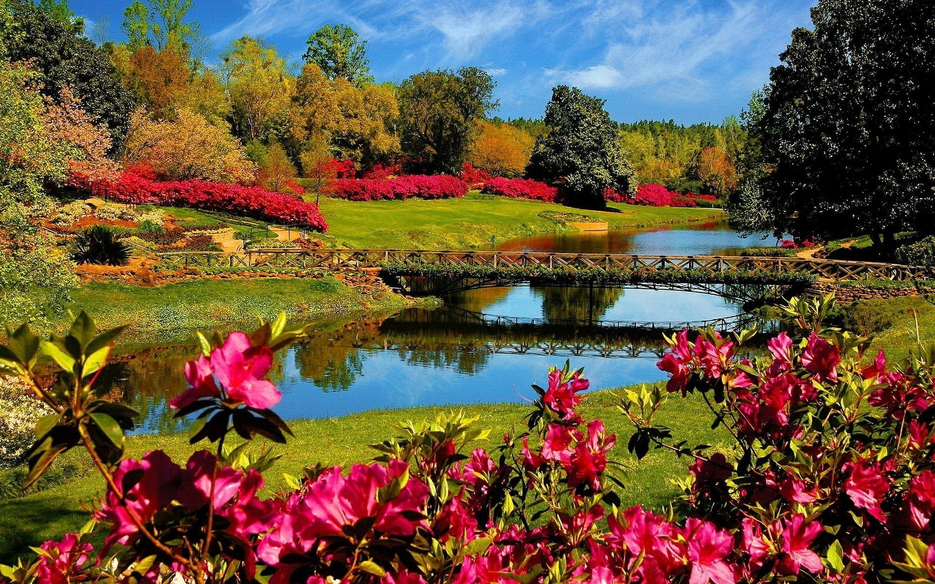 Multicolored River and Flowers wallpaper