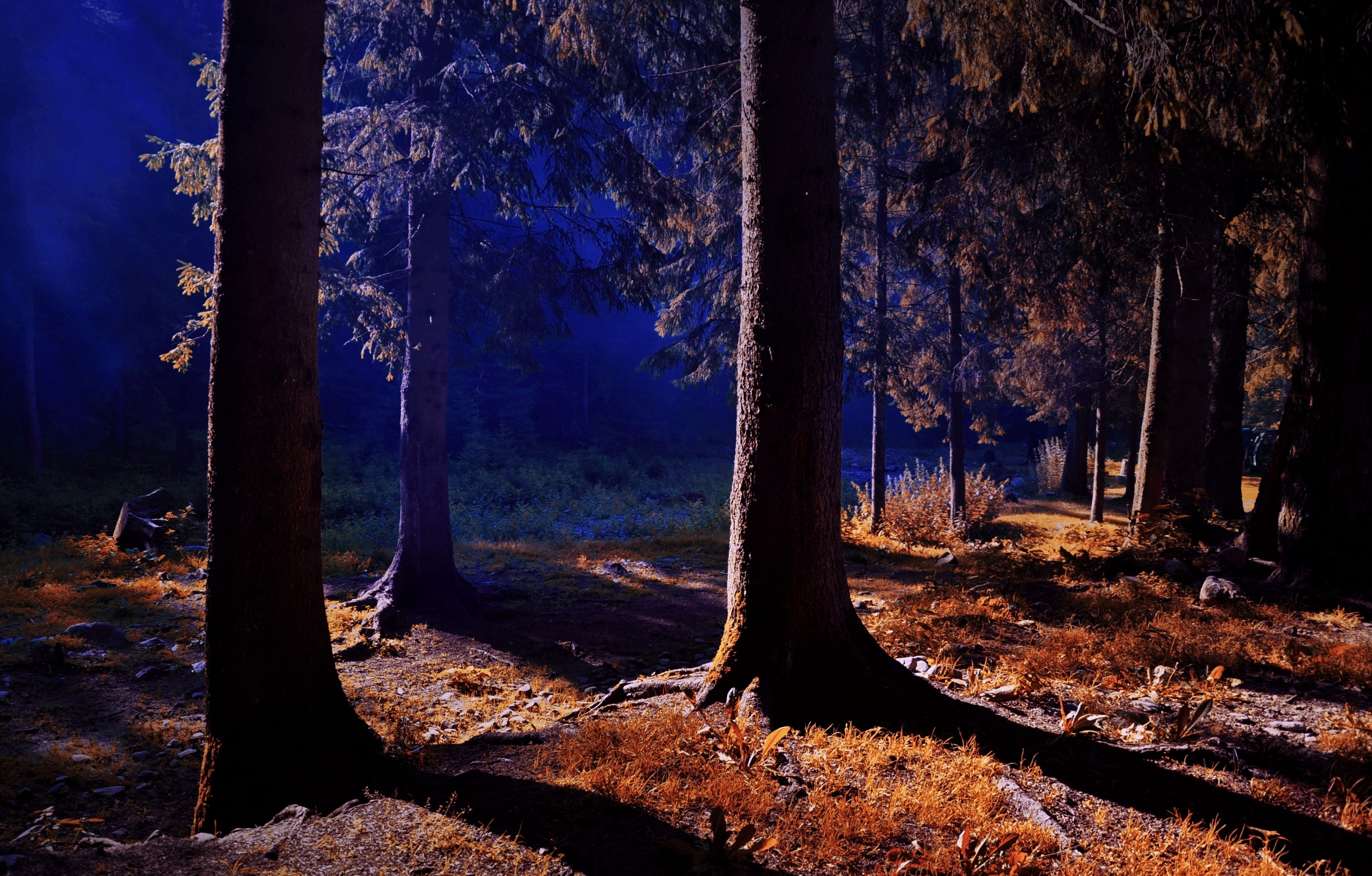 forest HD wallpapers and forest desktop backgrounds up to ...
