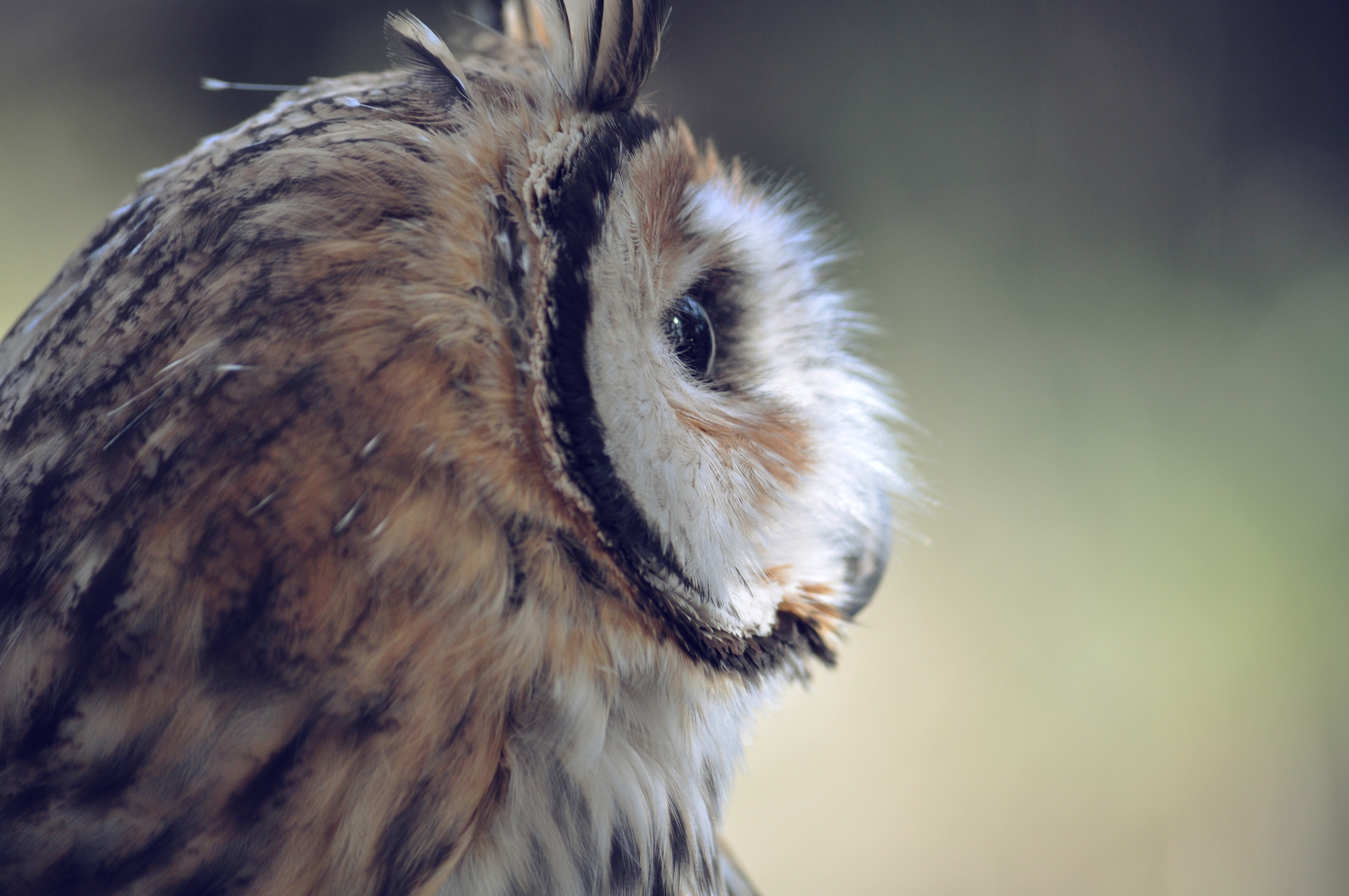 Owls 4k Wallpapers For Your Desktop Or Mobile Screen Free And Easy To Download