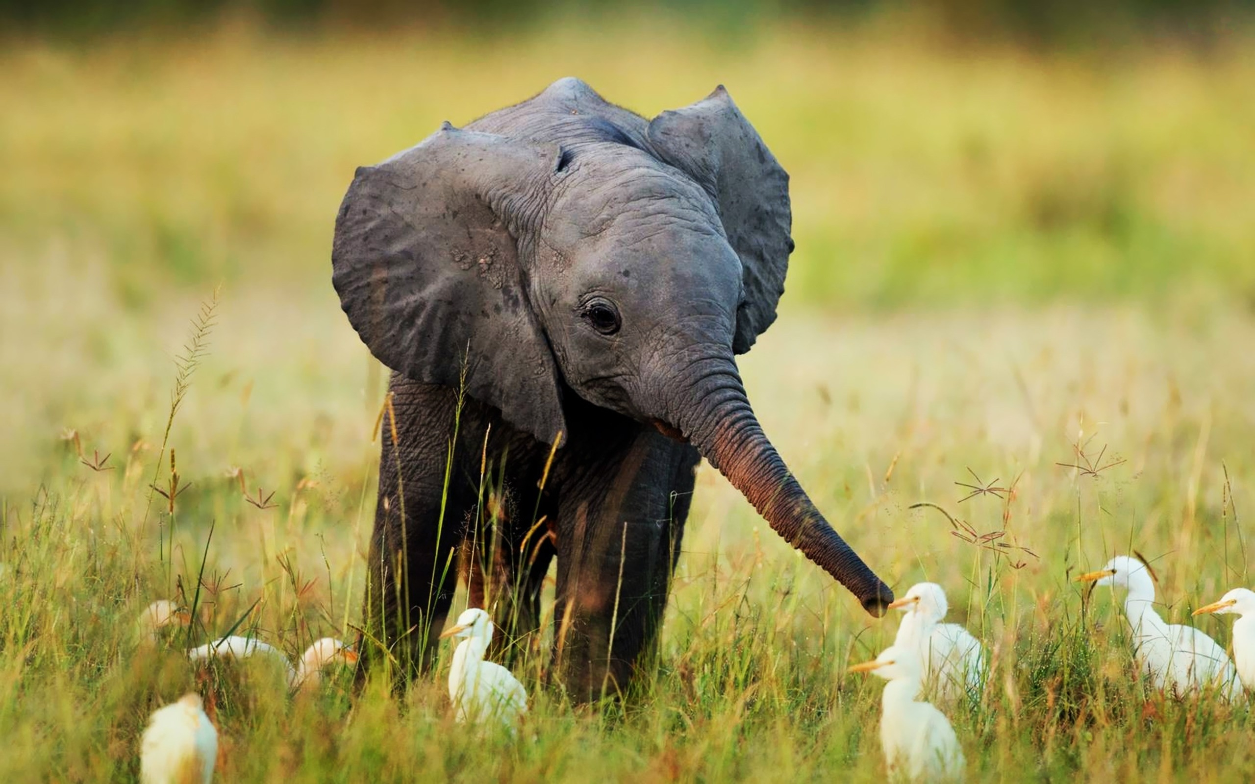 8k Animal Wallpaper Download: Elephant Wallpapers, Photos And Desktop Backgrounds Up To