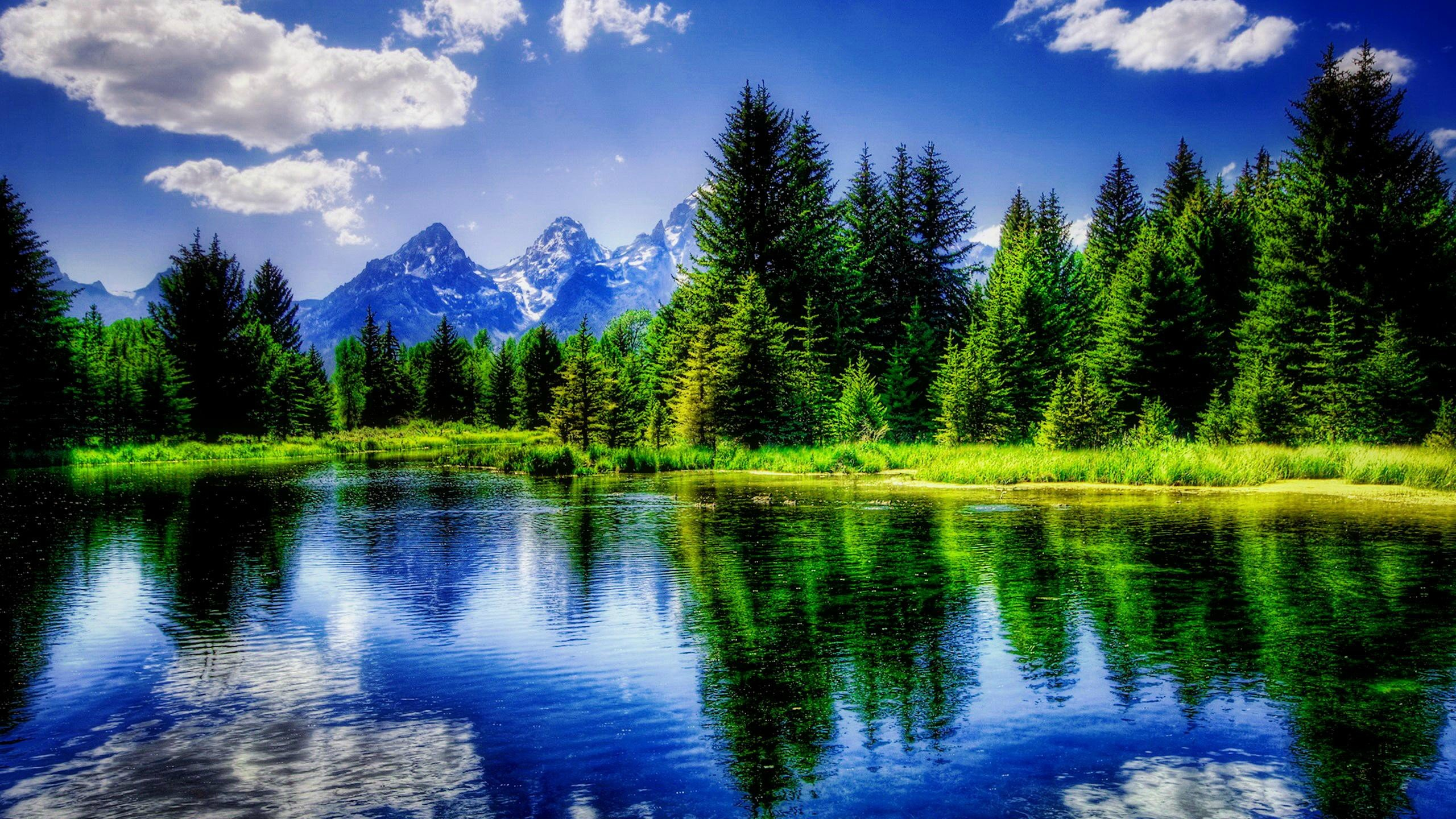 reflections nature tranquil beautiful trees wallpaper