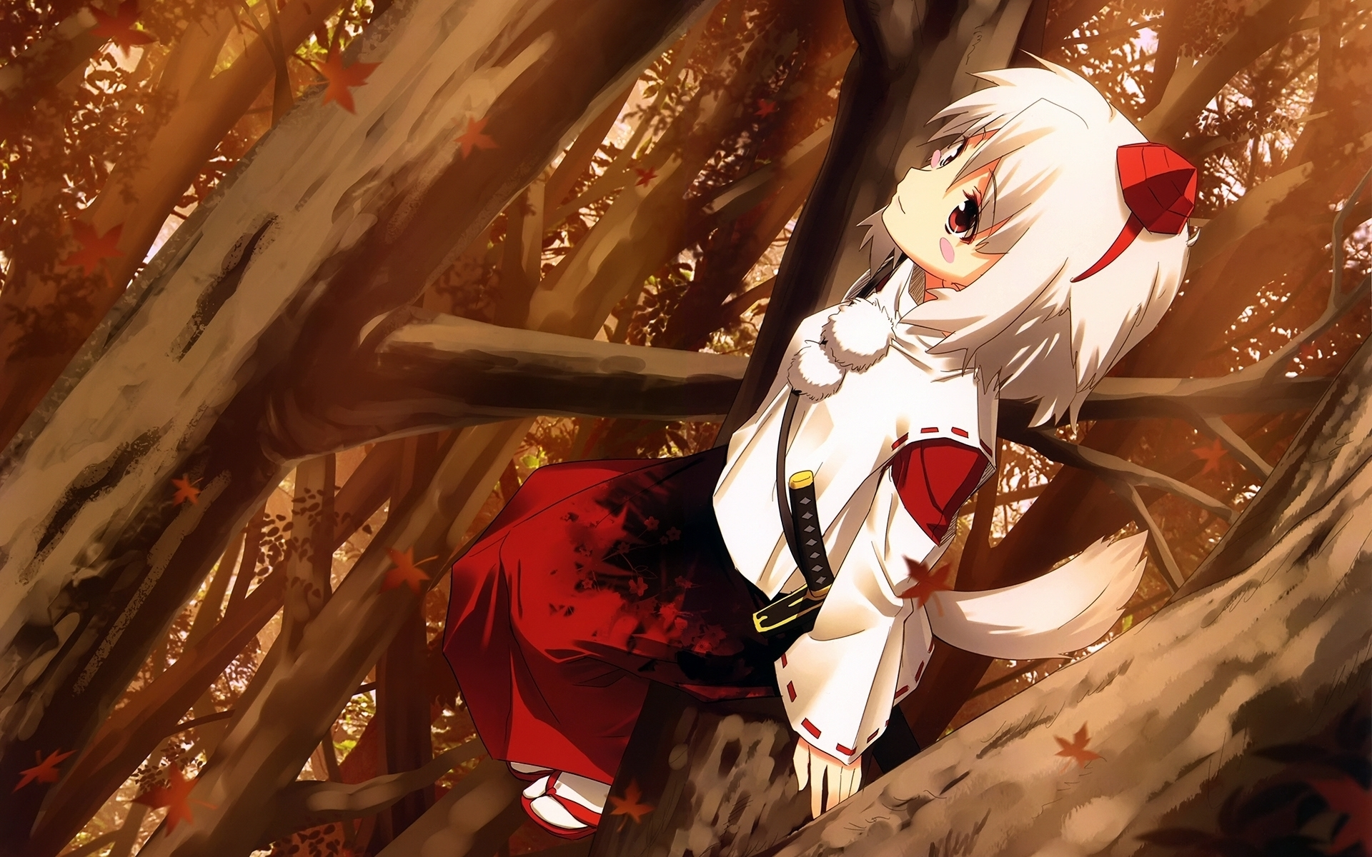 Anime Girl With White Wolf Ears And Tail HD wallpaper