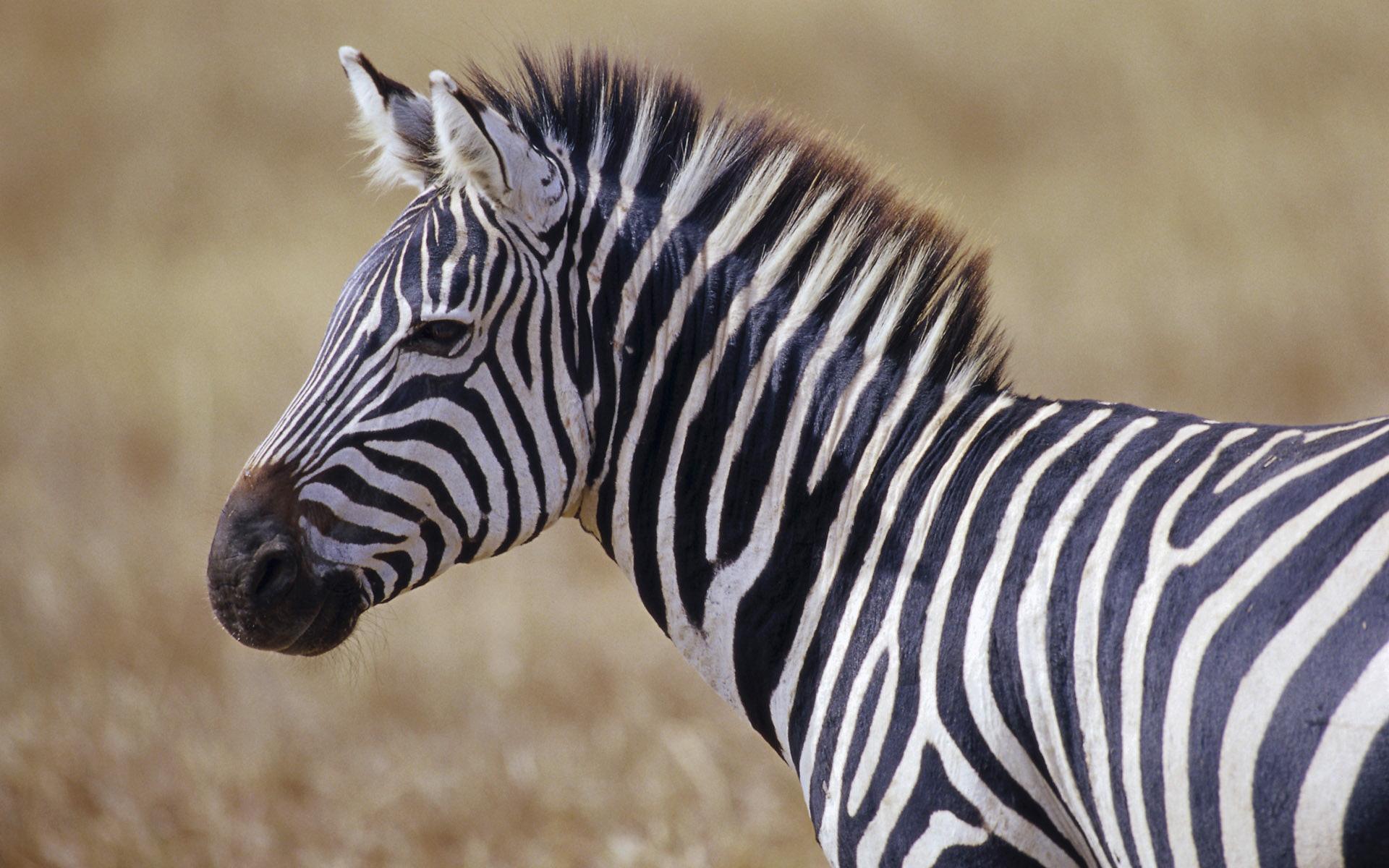 wildlife backgrounds related keywords - photo #9
