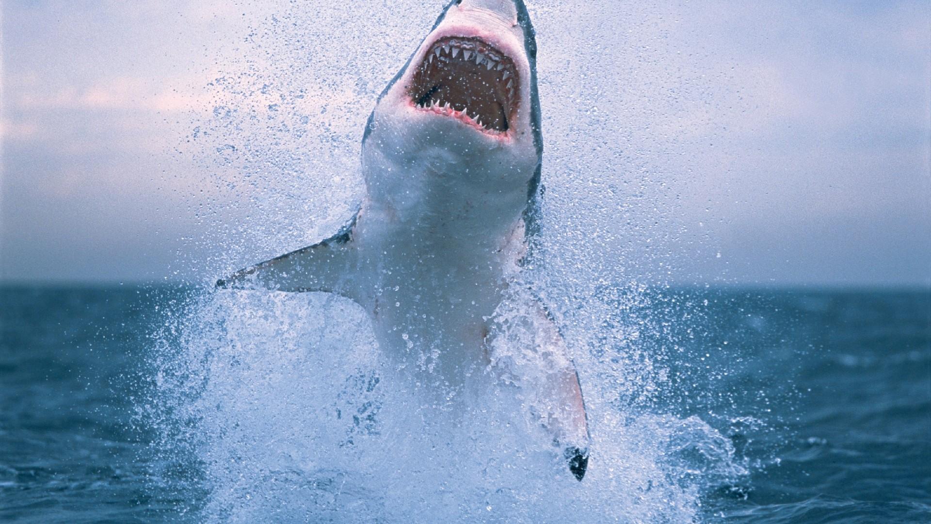 Shark jumping hd wallpaper shark jumping hd wallpaper voltagebd Images