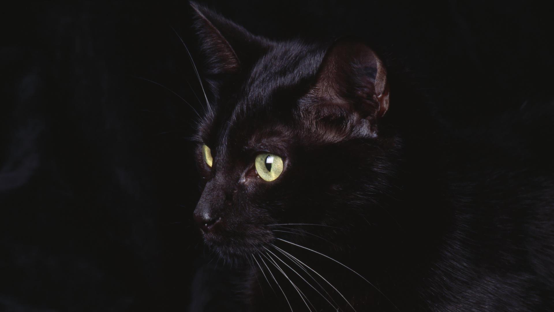 Black Cat In The Dark Hd Wallpaper