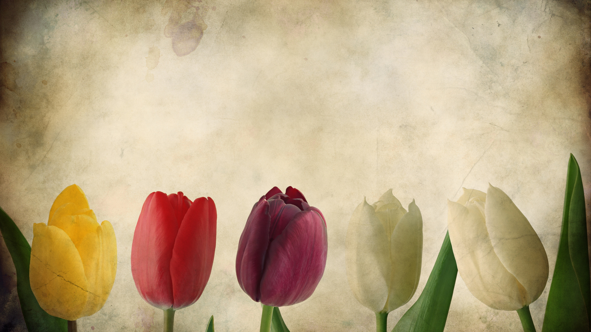 Pictures Grunge Texture Tulips 46692 wallpaper