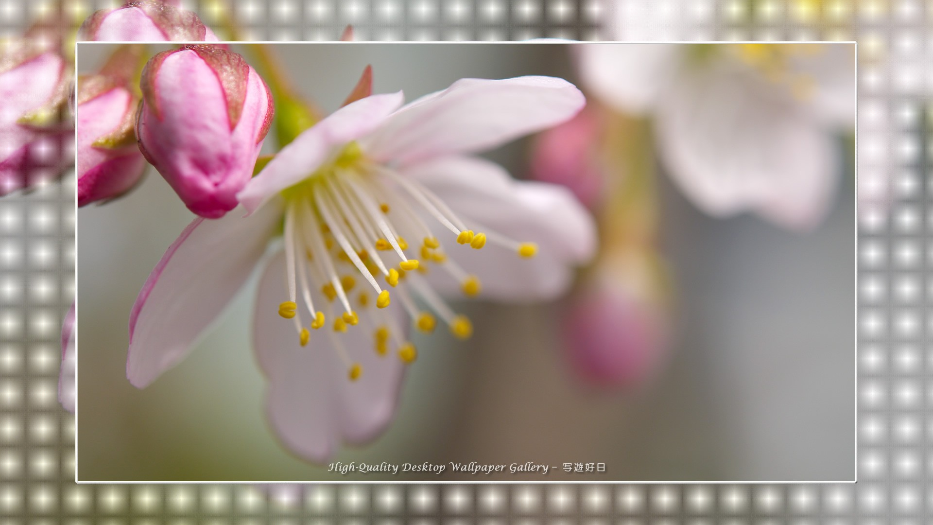 Spring Flowers Background Desktop Wallpapertag