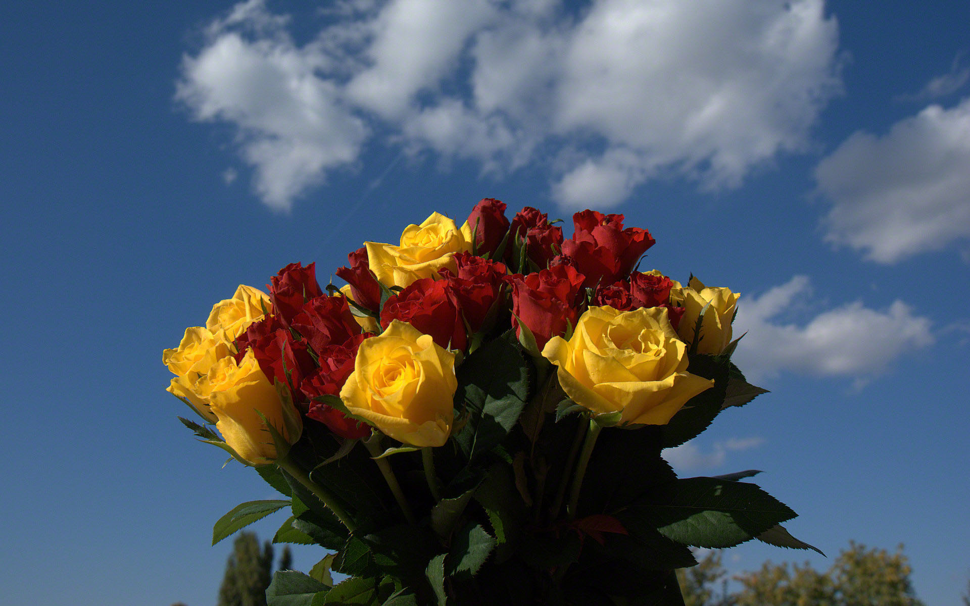 bouquet wallpapers, photos and desktop backgrounds up to ...