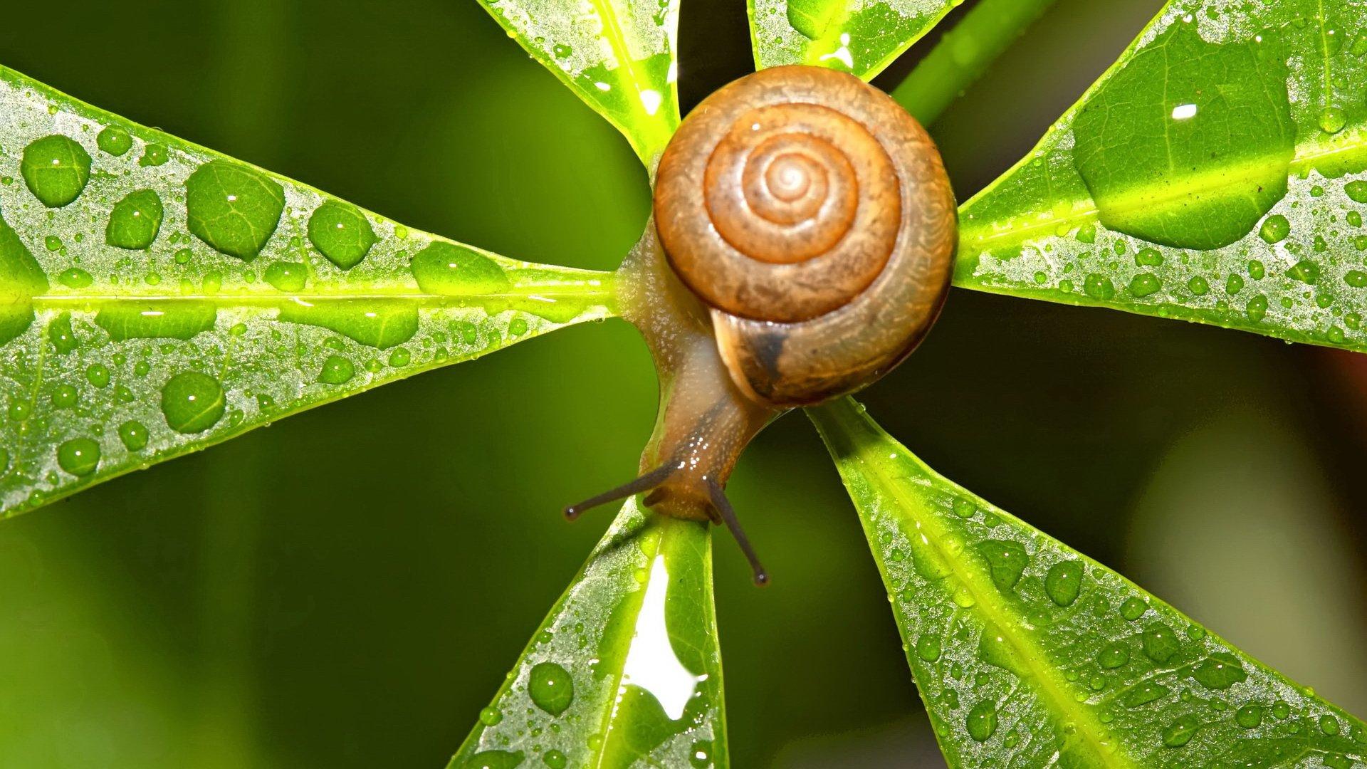 snail-leaf-wallpaper.jpg
