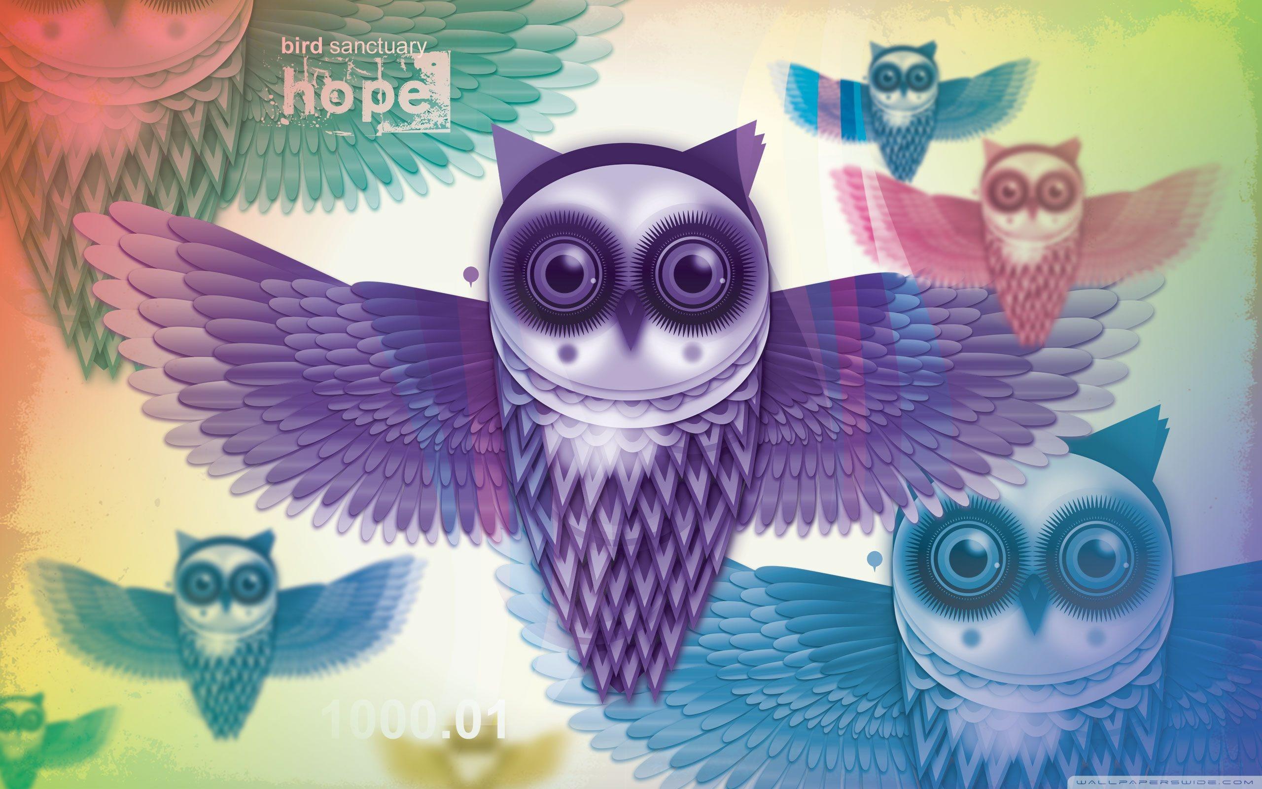 Cute Owl Hd Wallpaper
