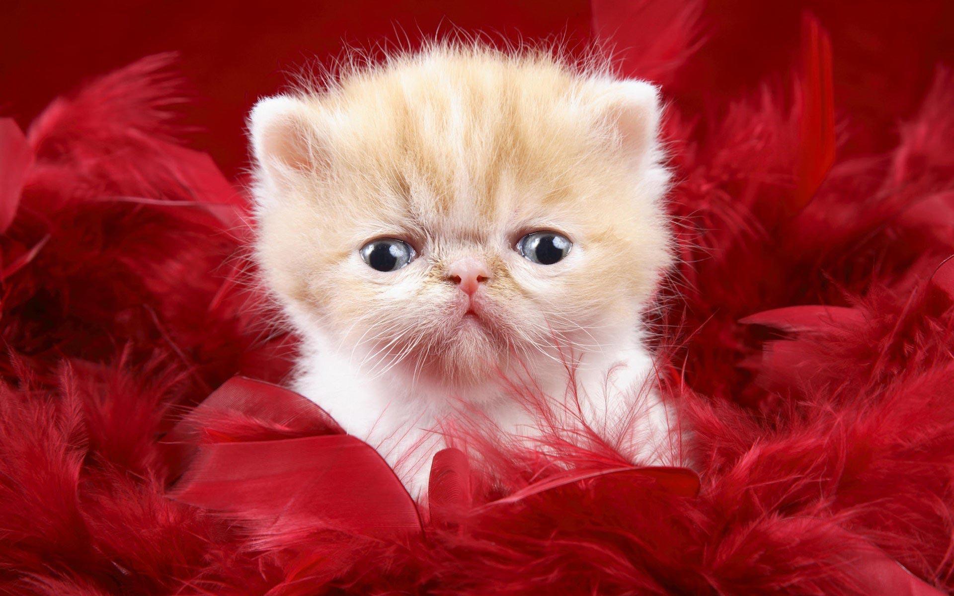Funny Kitty HD wallpaper