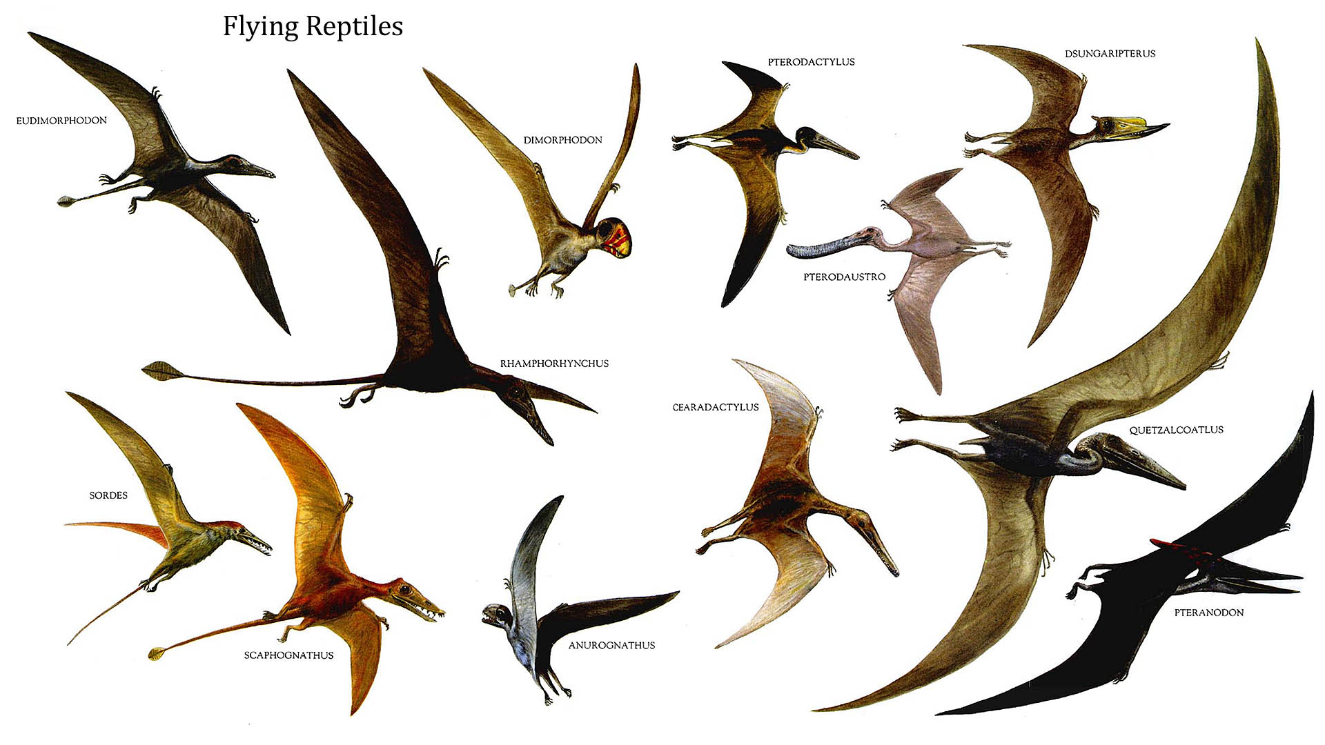 Flying dinosaurs names hd wallpaper - Dinosaur volant ...
