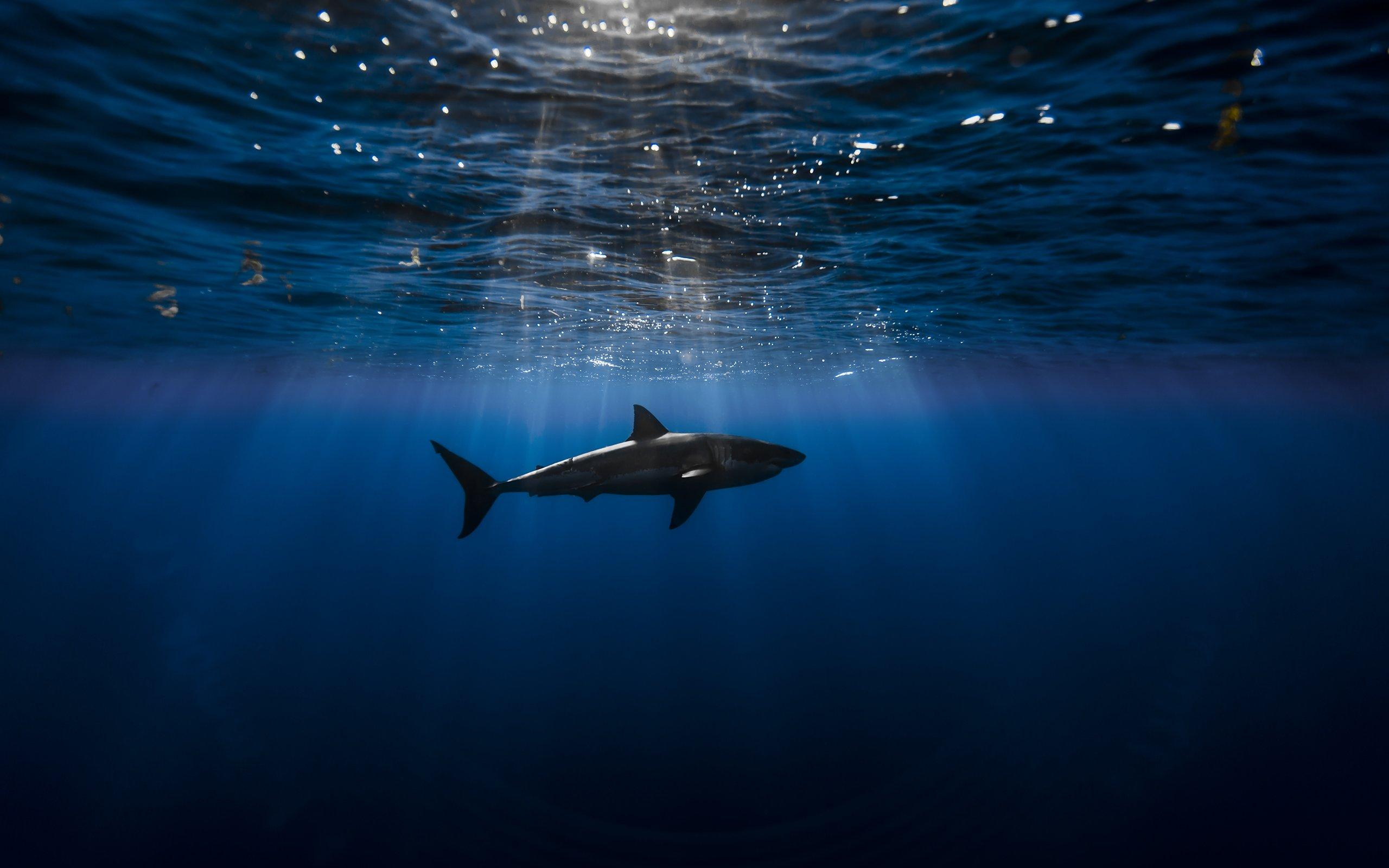 Underwater of a Shark HD wallpaper
