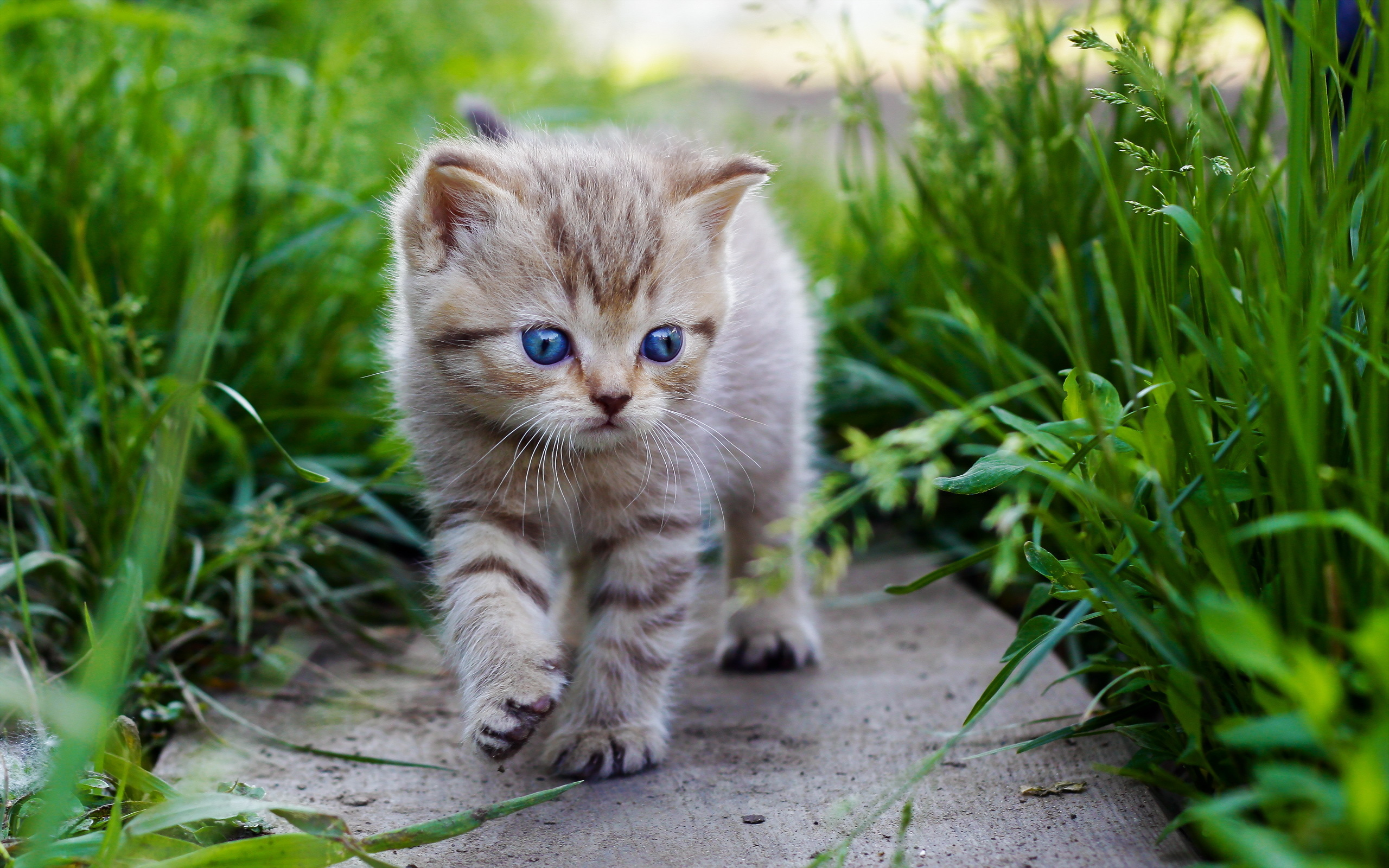 Cute baby cats hd wallpaper - Kitten wallpaper hd ...