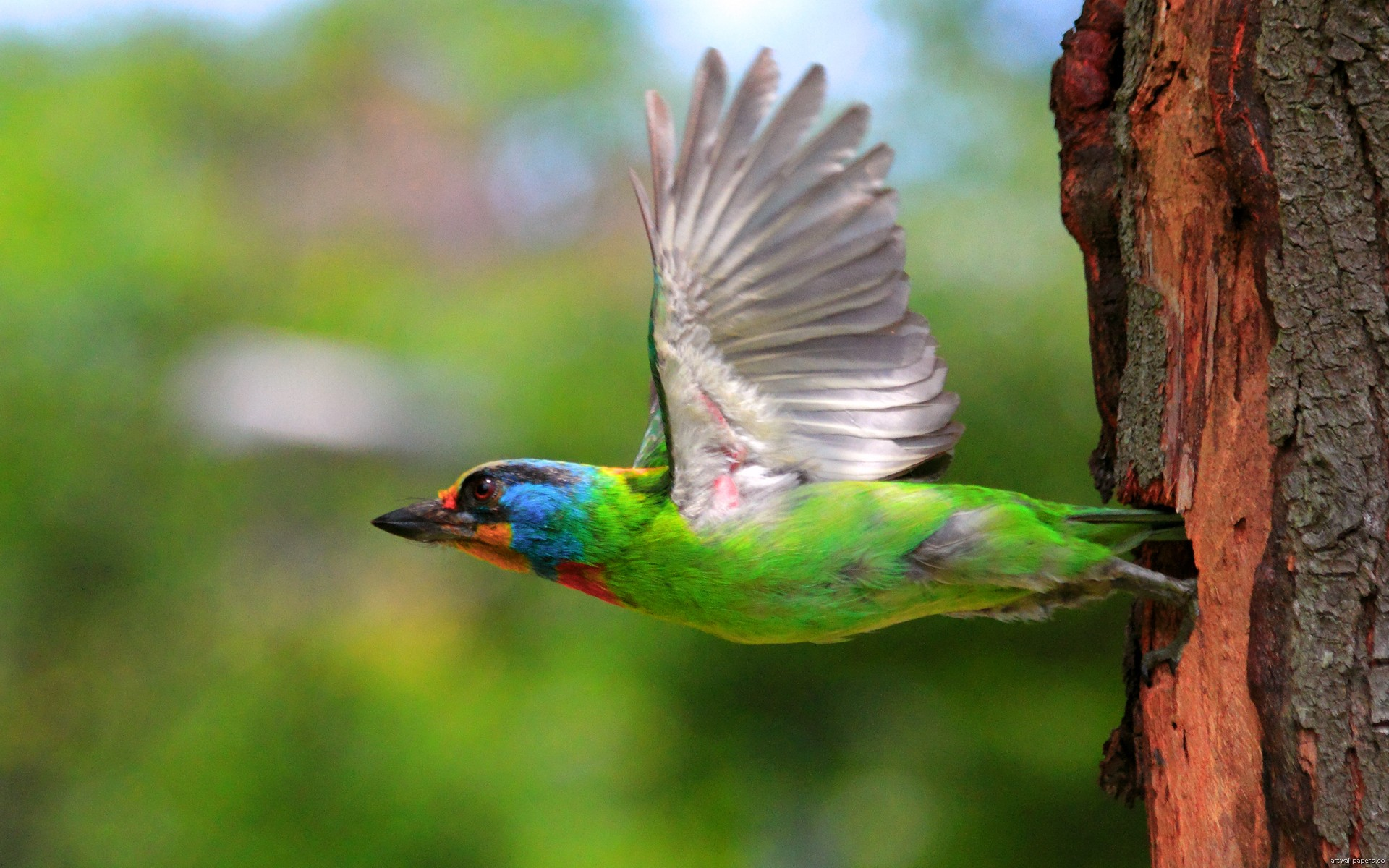 Page 3 of nature hd wallpapers and nature desktop backgrounds - Animal and bird hd wallpaper ...