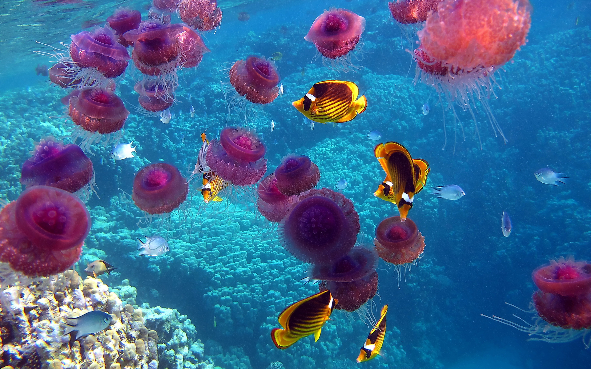 Underwater wallpapers photos and desktop backgrounds up - Jellyfish hd images ...