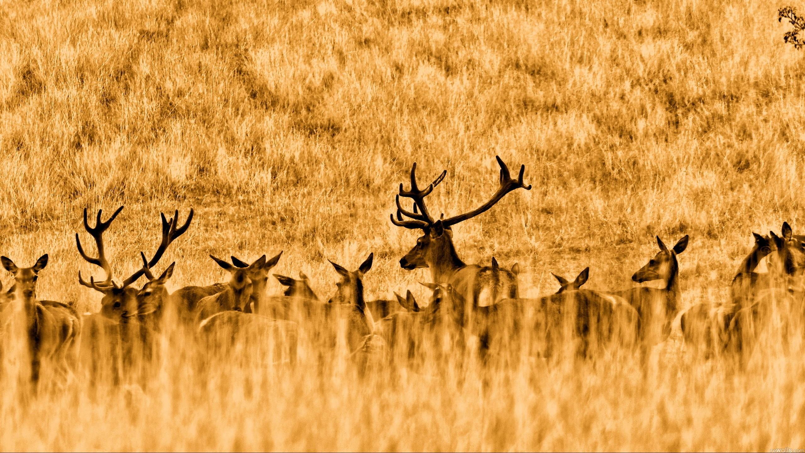8k Animal Wallpaper Download: Wildlife Wallpapers, Photos And Desktop Backgrounds Up To