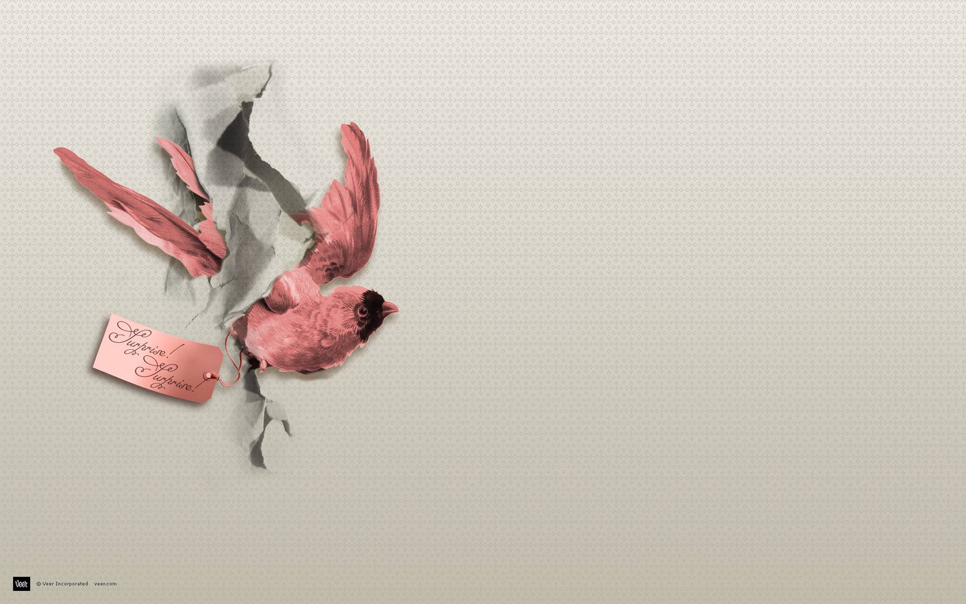 Page 4 Of Bird Wallpapers Photos And Desktop Backgrounds