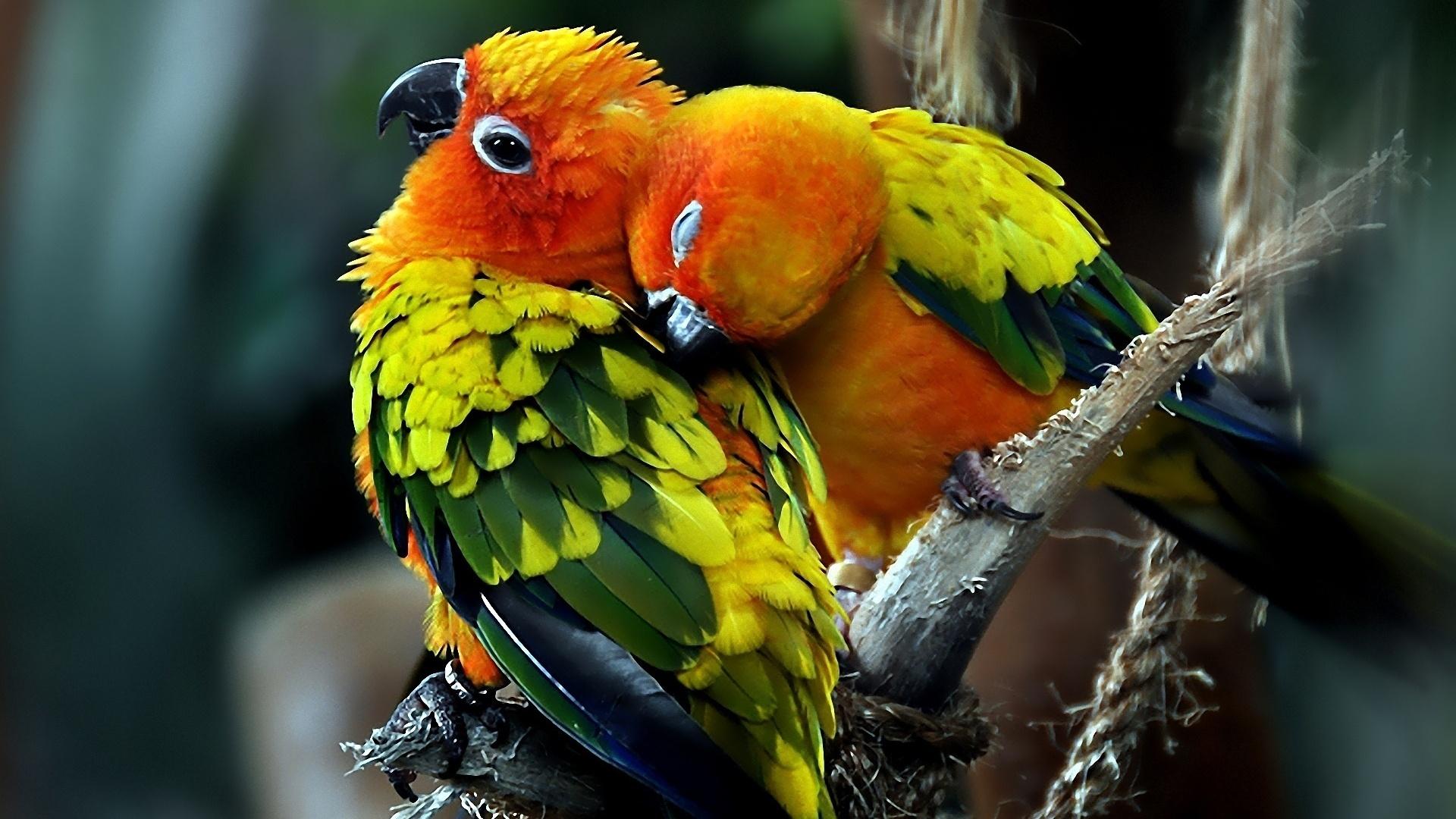 470+ Wallpaper Romantic Birds Gratis Terbaru