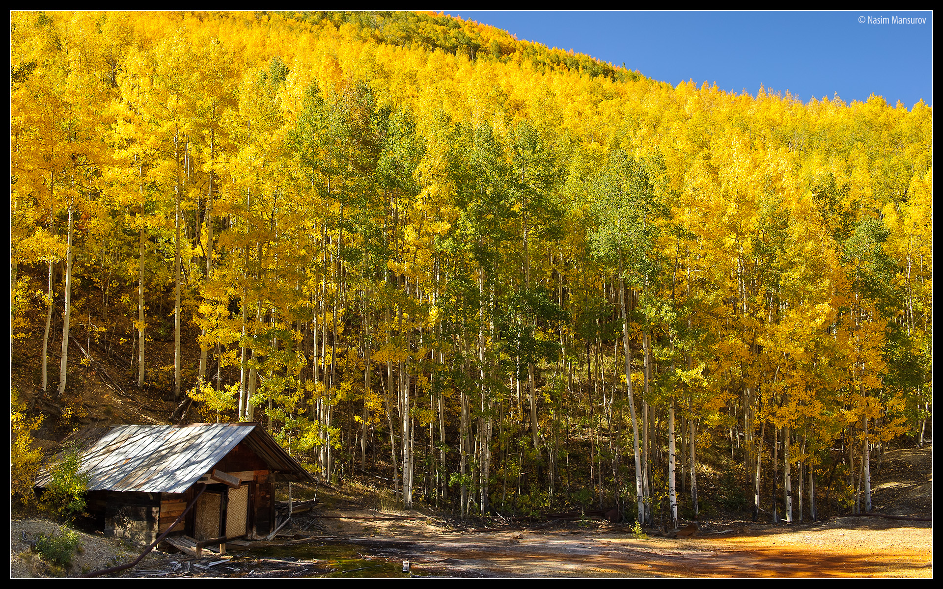 House Aspens Abandoned Paper Landscapes Best wallpaper