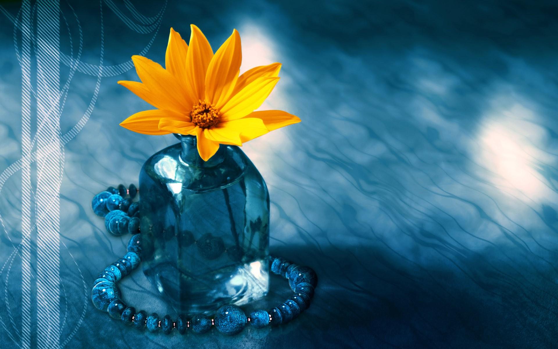 Yellow Flower In A Vase Hd Wallpaper