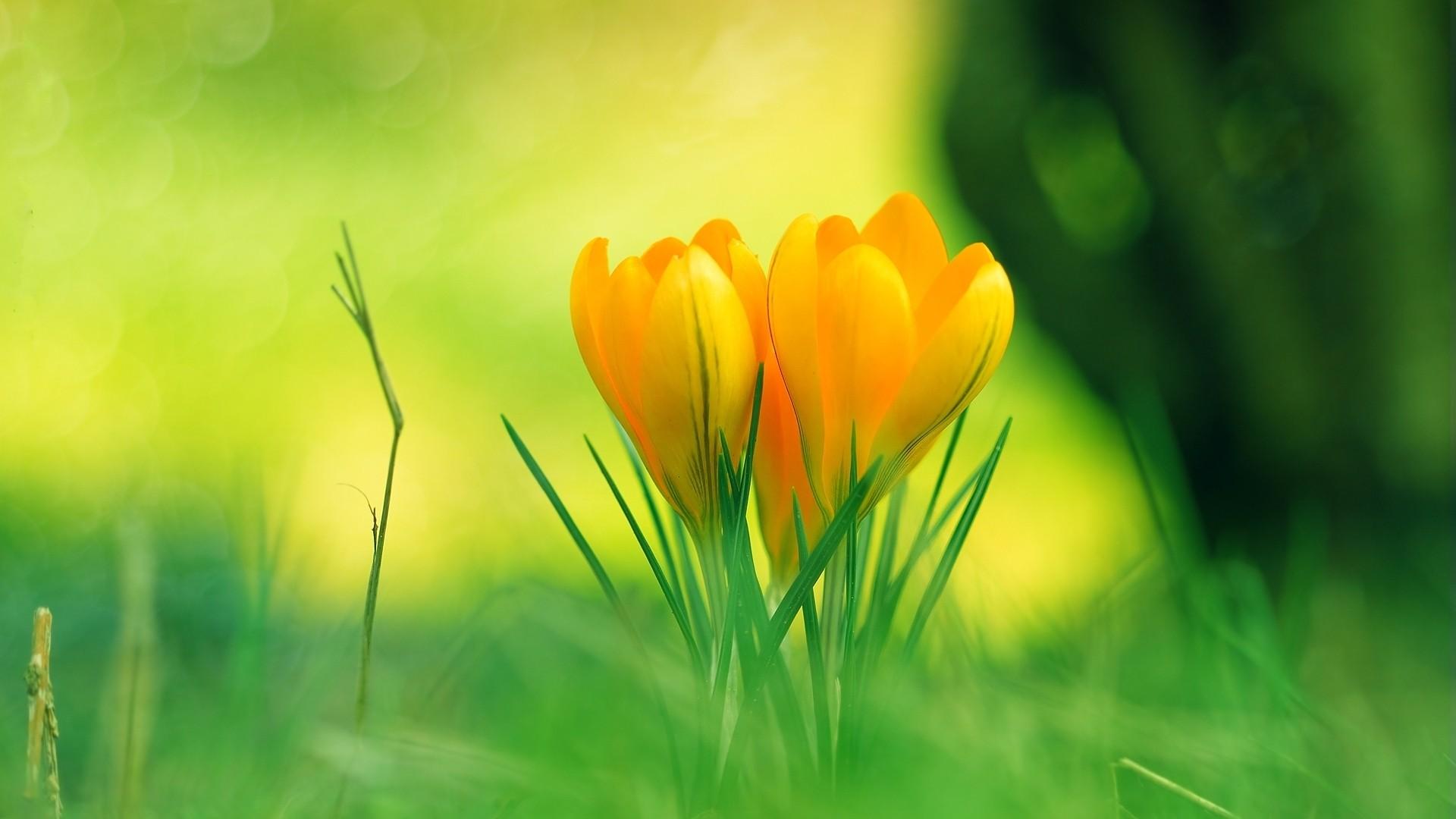 Yellow Flowers Desktop HD wallpaper