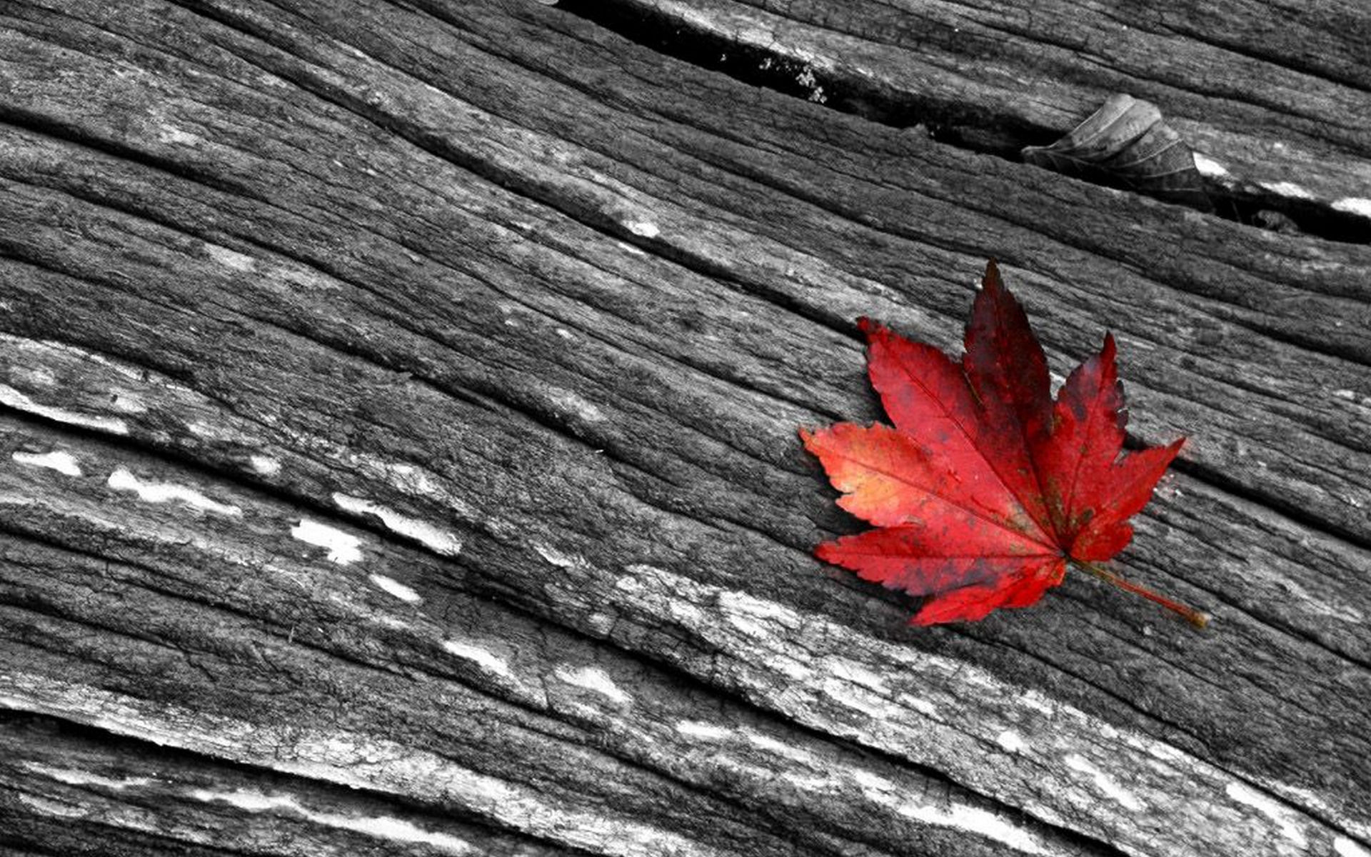 Black white and red photography wide hd wallpaper