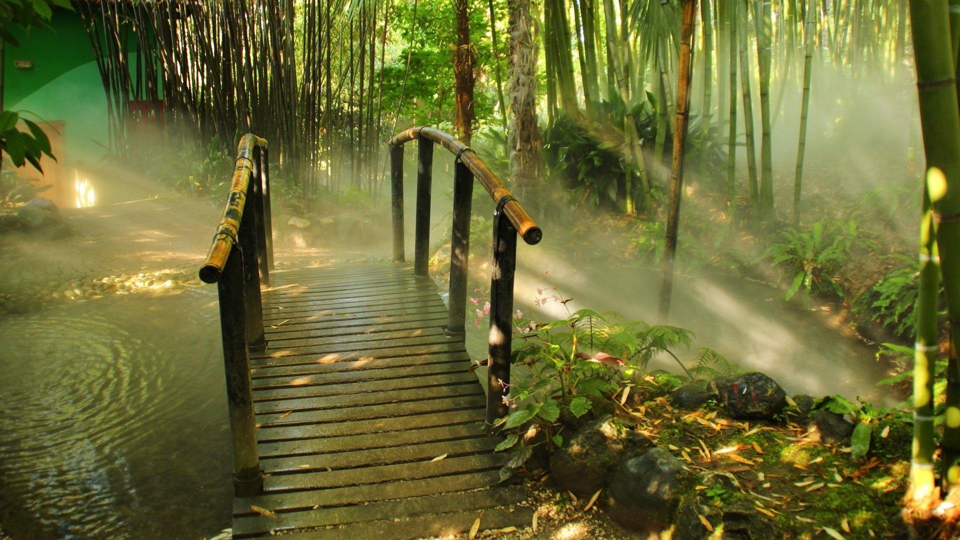 bamboo forest hd wallpaper