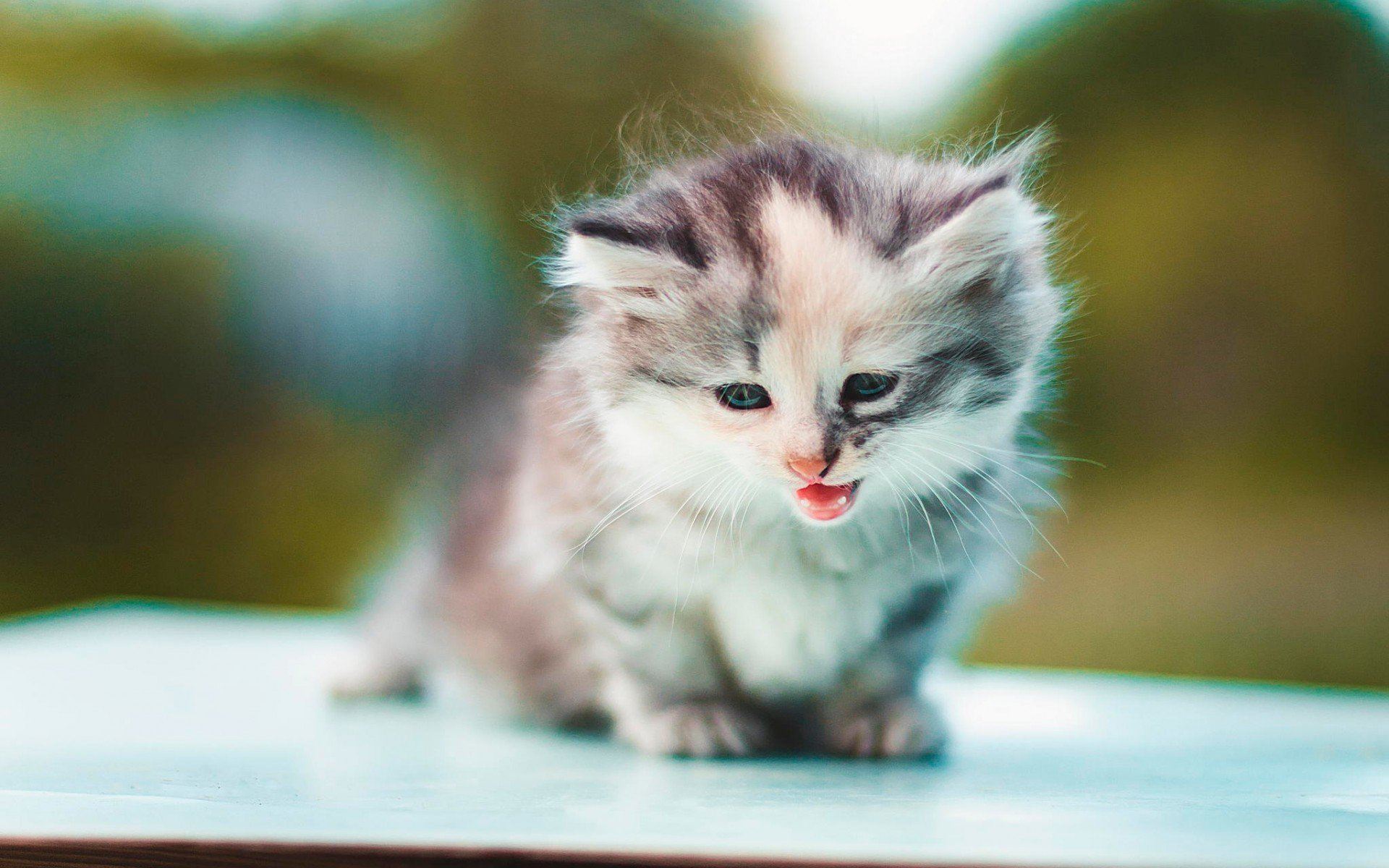 Kitten wallpapers photos and desktop backgrounds up to 8k - Kitten backgrounds ...