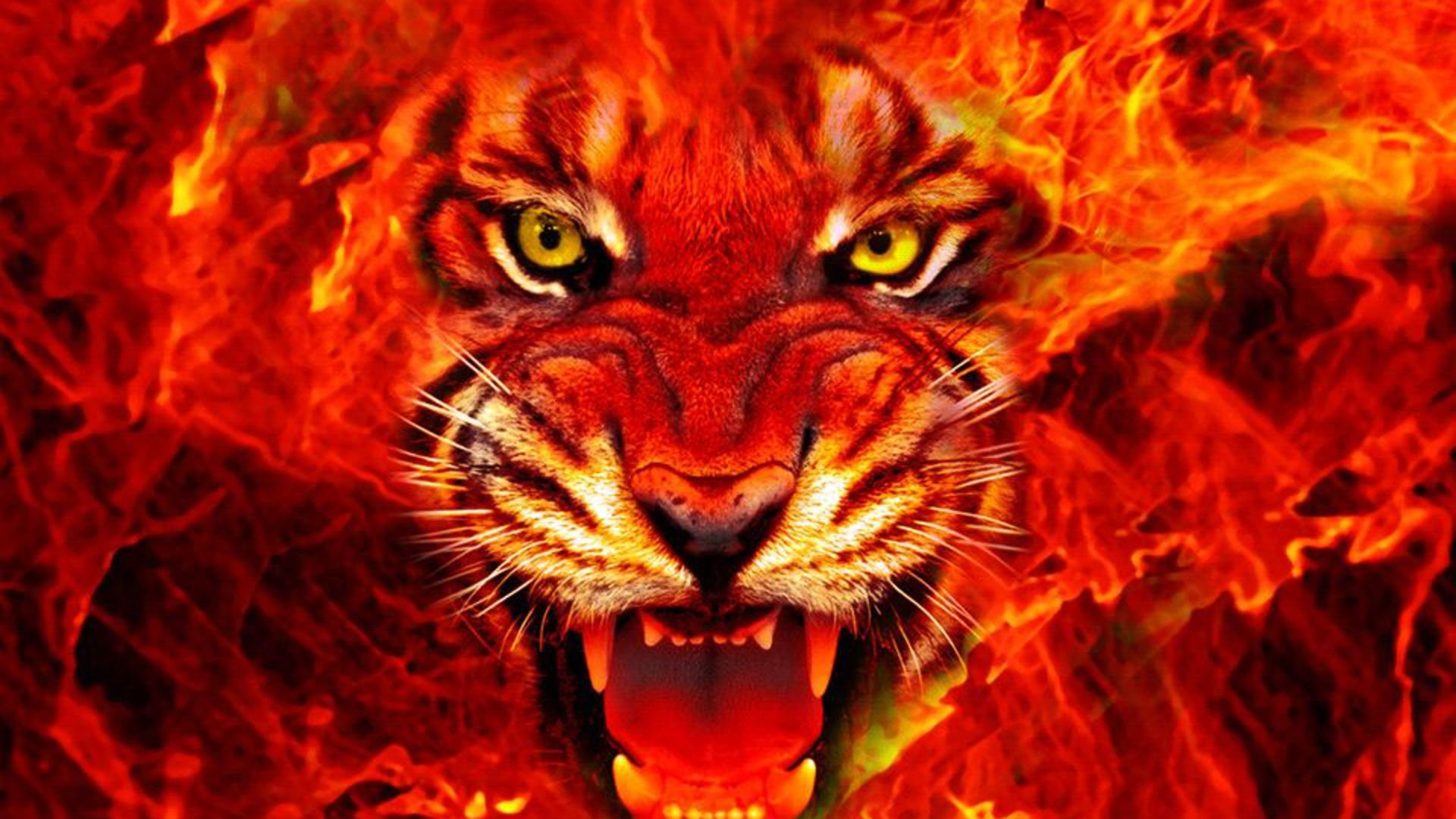 Tiger-Fire-HD wallpaper