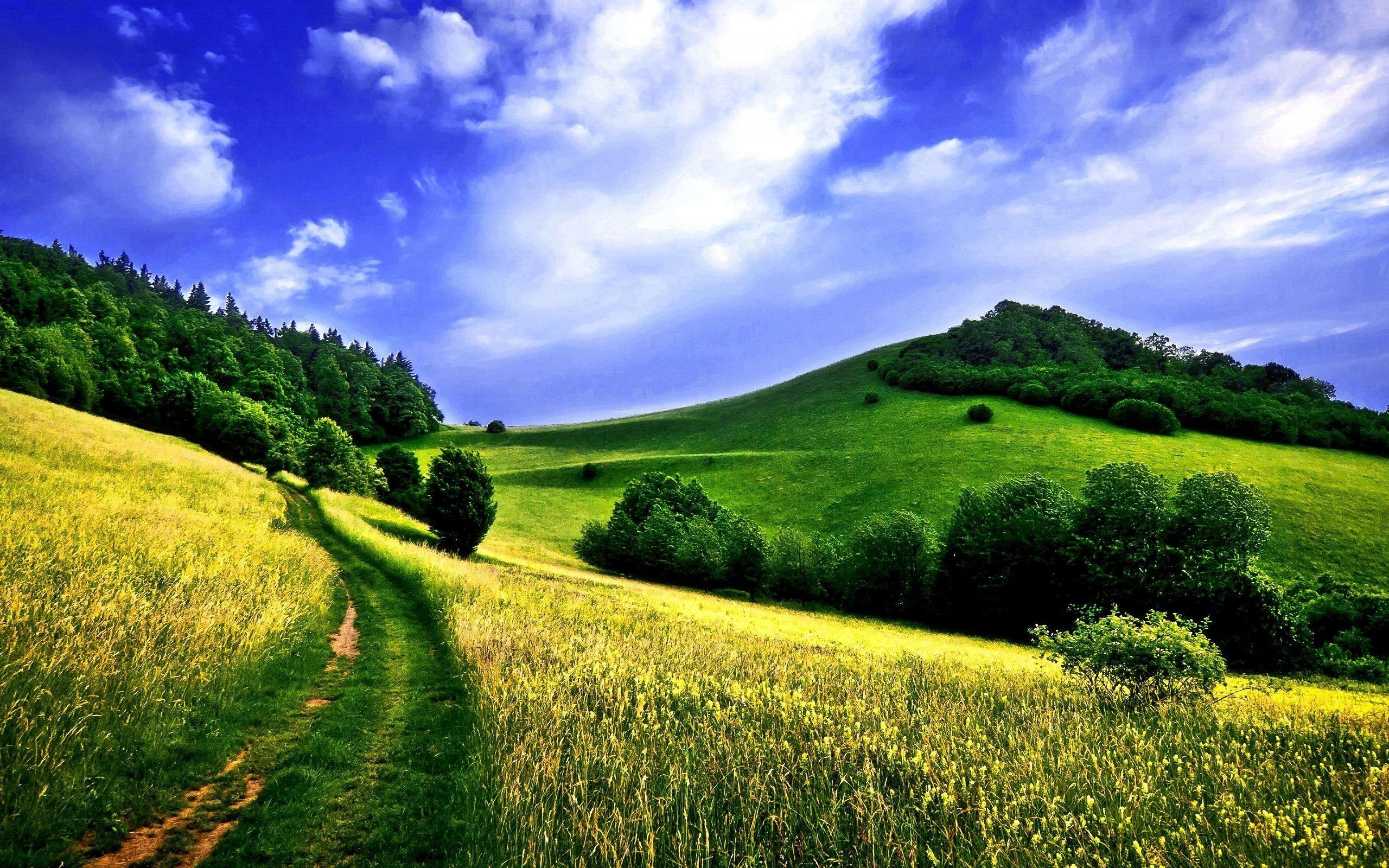 Green Fields Meadow 4K Wallpaper