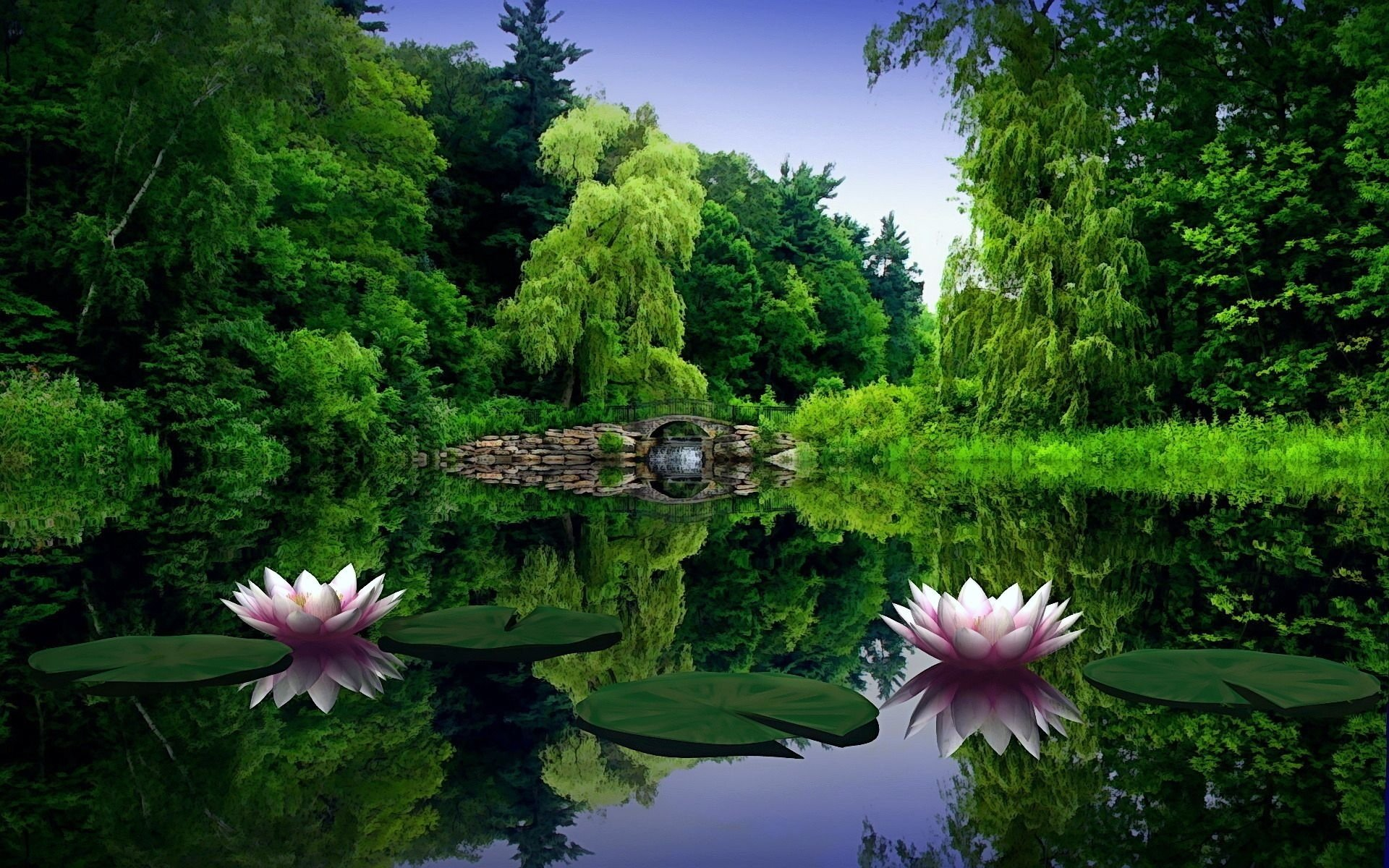Lotus Flower S Hd Wallpaper