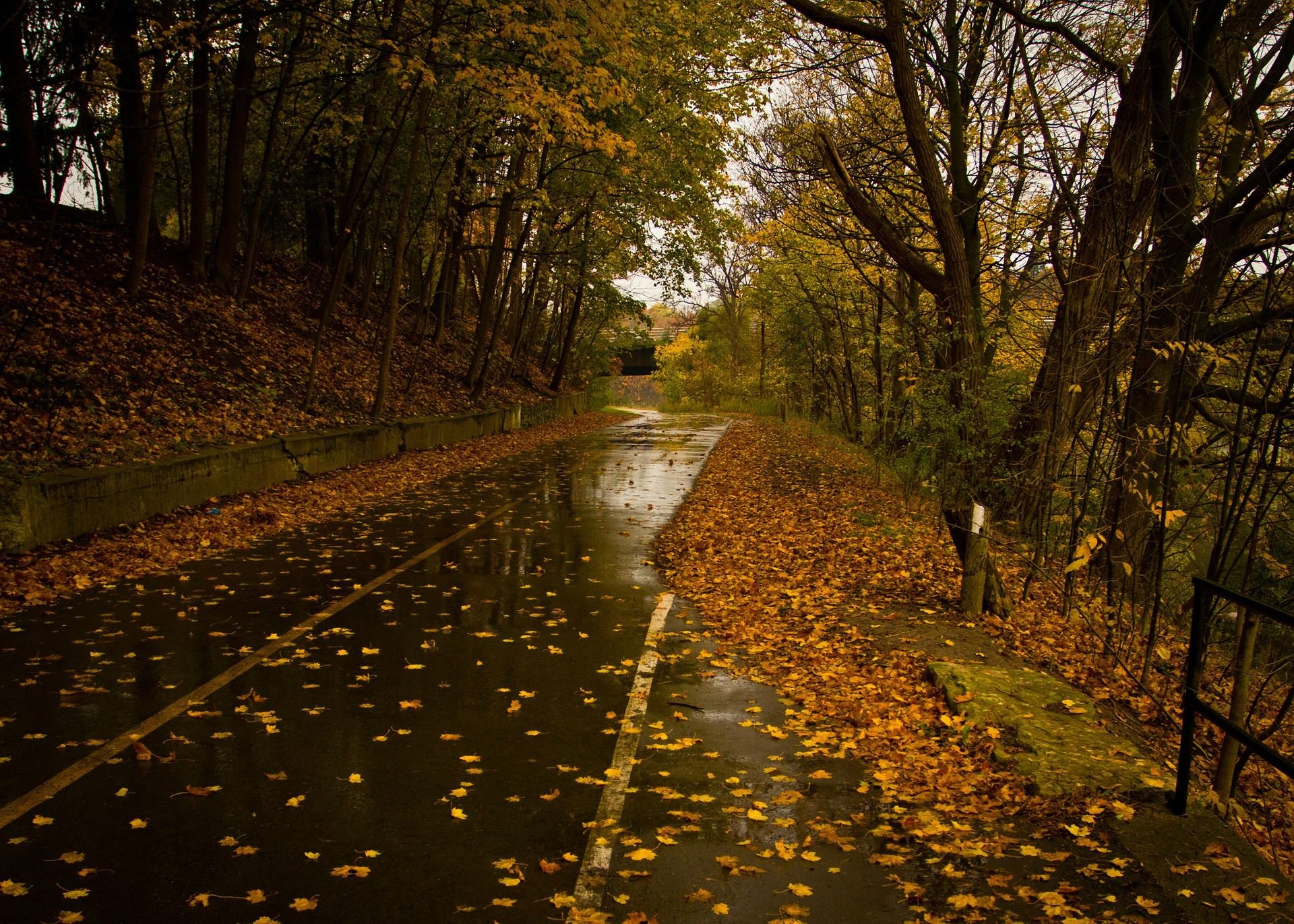 Wet Road Rainy Day Leaves Fall Autumn Hd Wallpaper