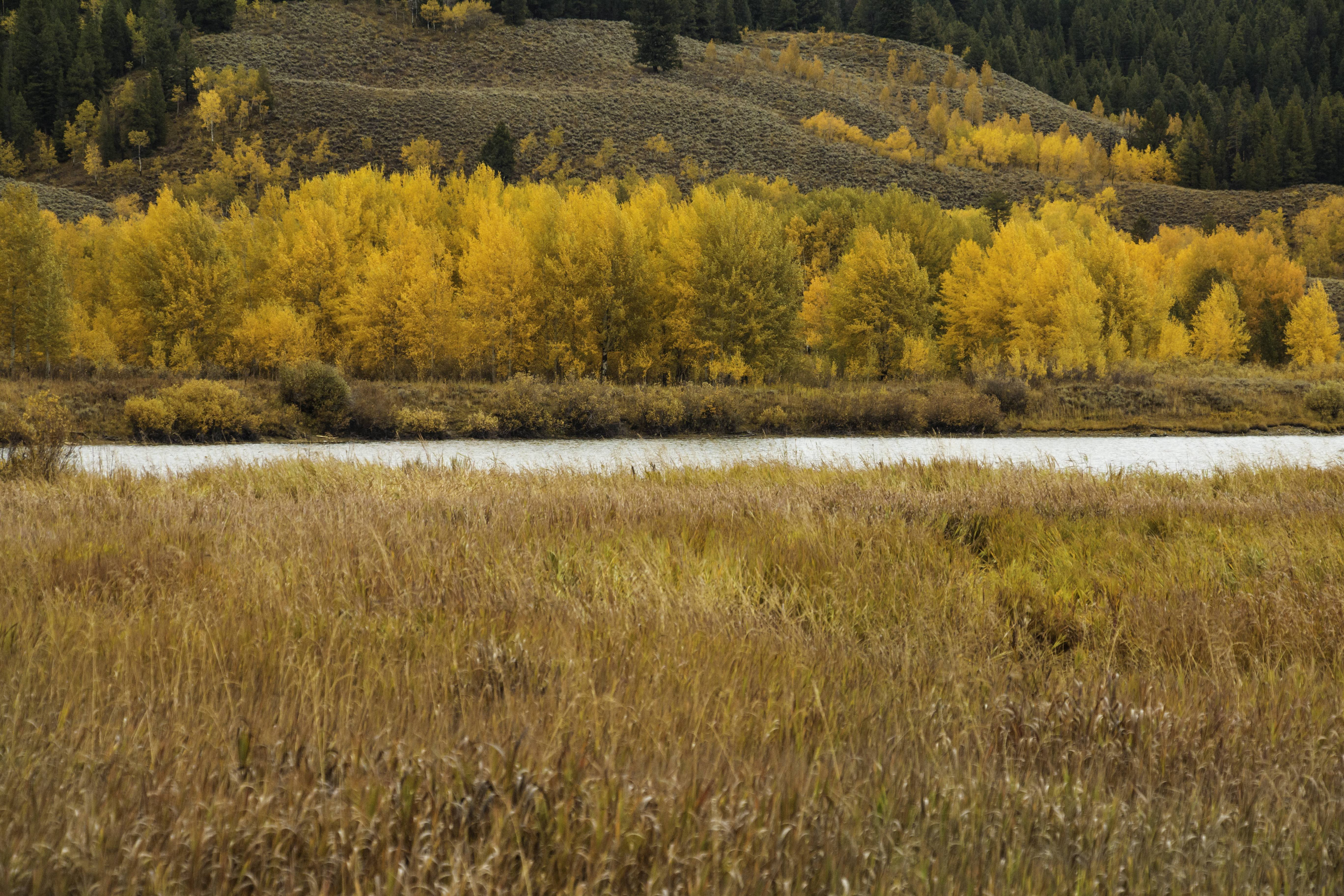 Fall Colors Across Snake River Grand Tetons National Park wallpaper