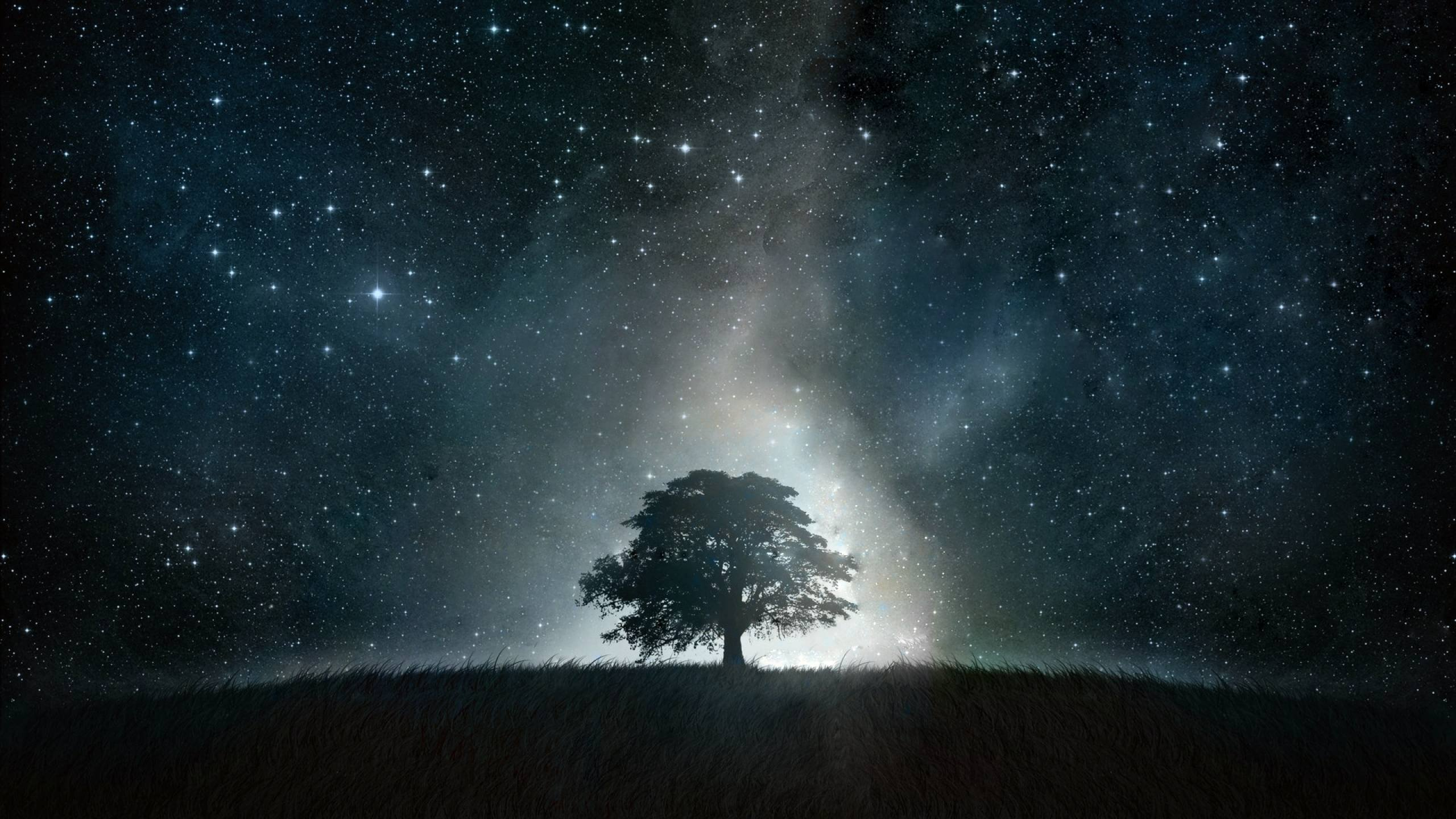 Black Tree Galaxy wallpaper