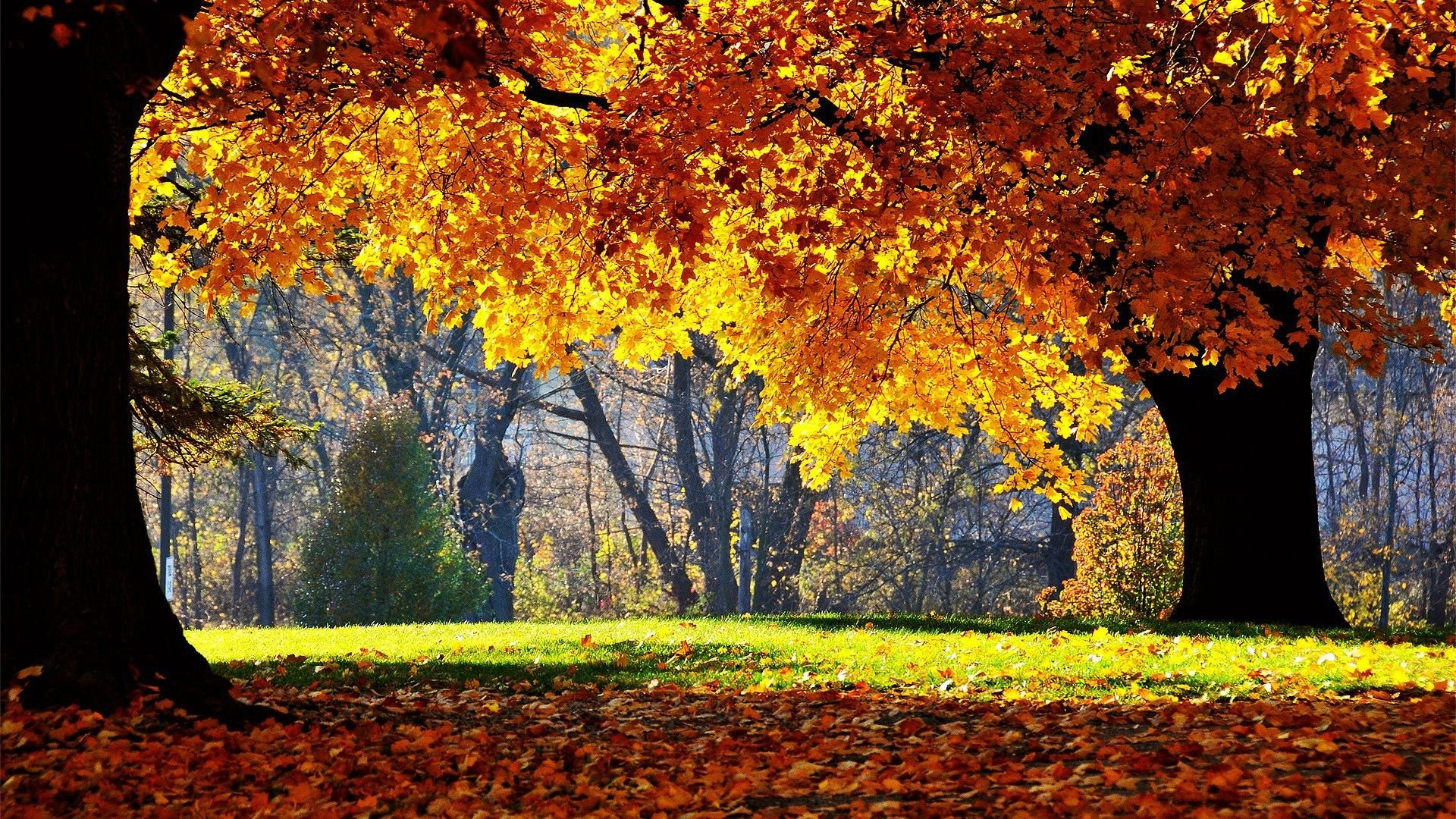 Page 3 of sunny wallpapers photos and desktop backgrounds - Sunny day wallpaper ...