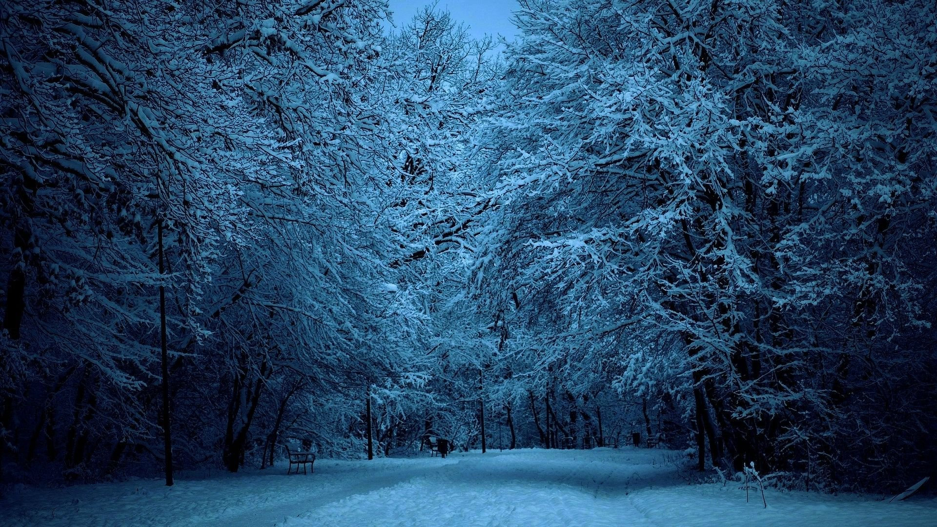 Snowy Trees 16533 HD Wallpaper