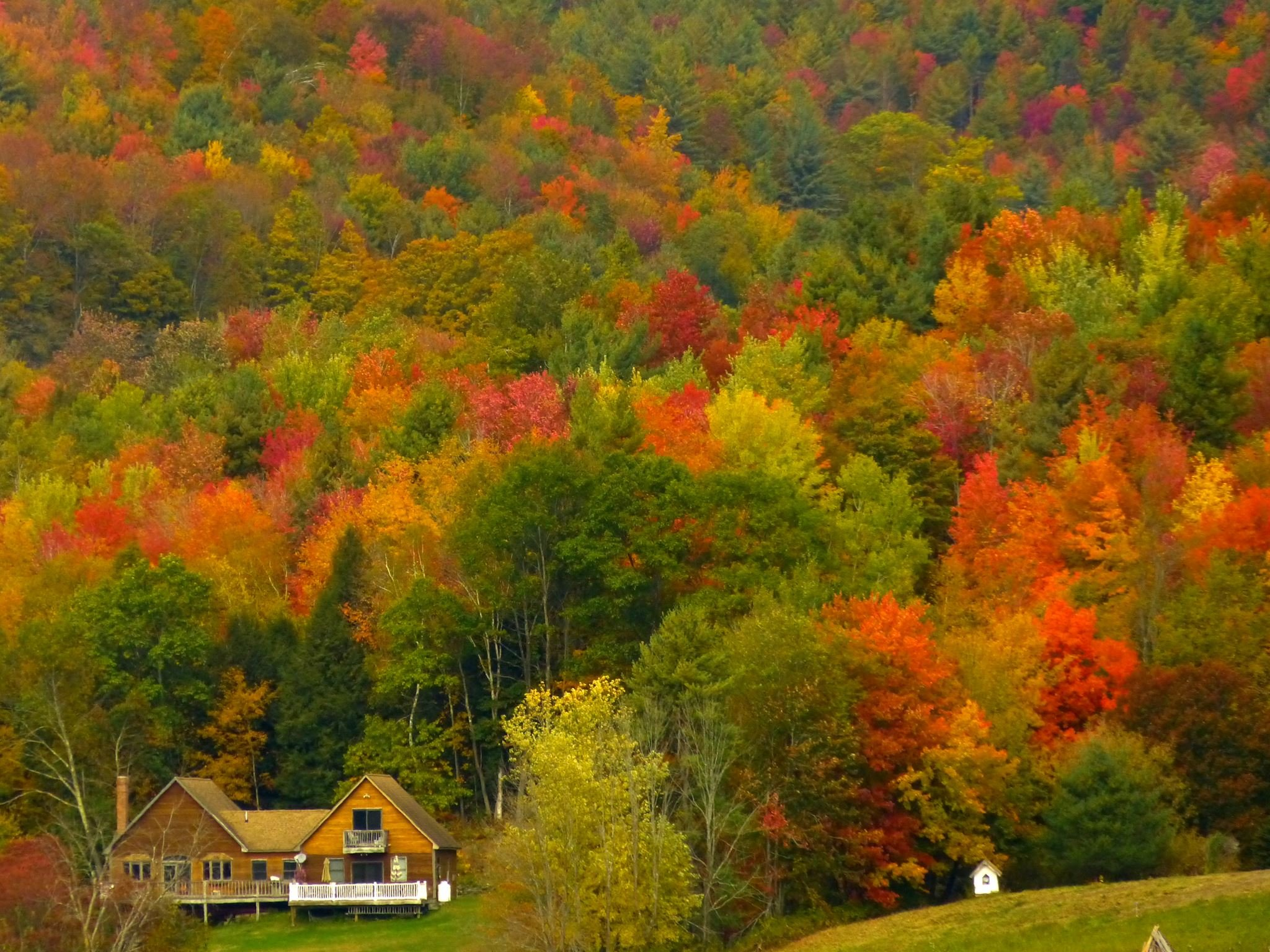 vermont is the queen of fall colors hd wallpaper