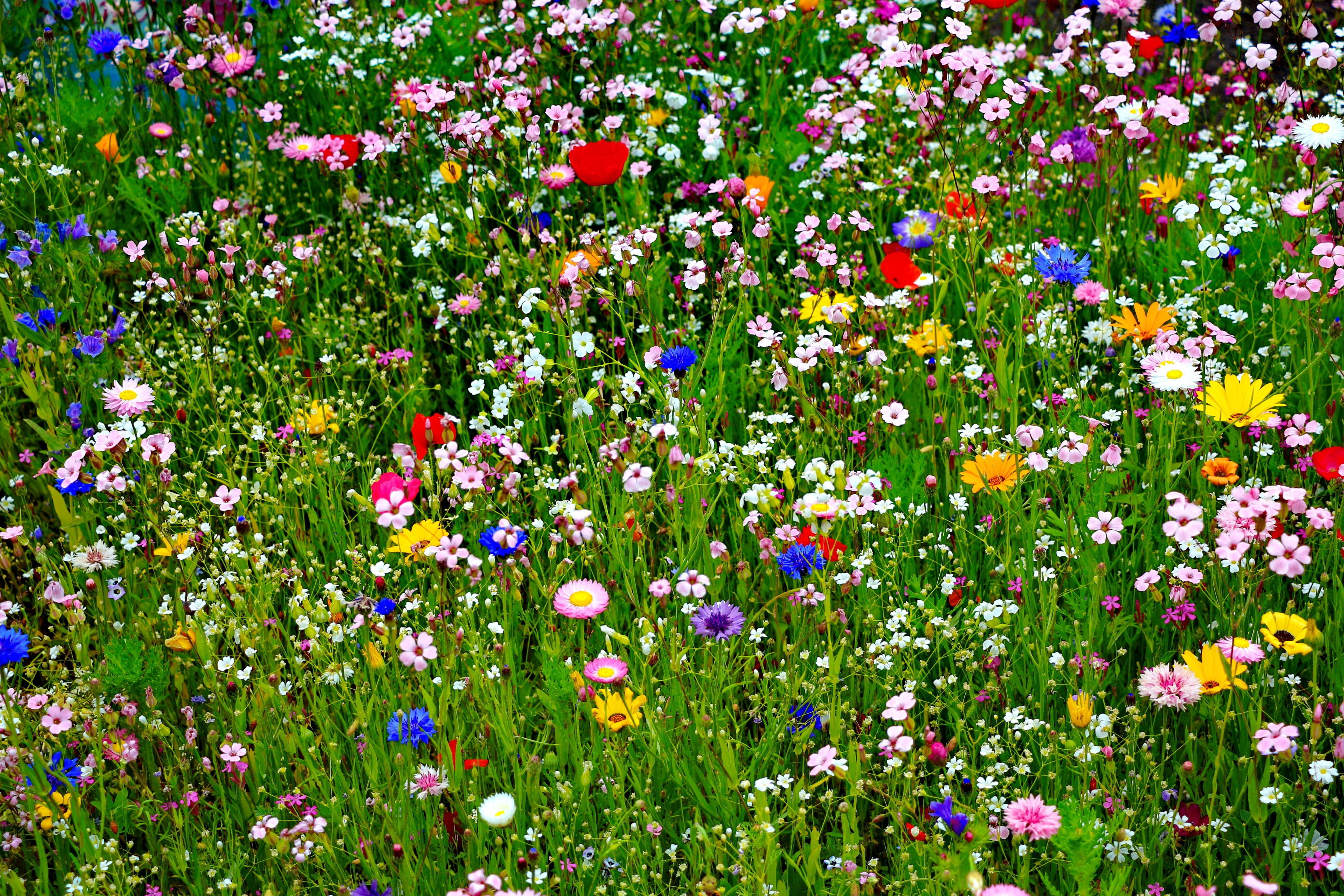 Free Colorful Flower Wallpaper Downloads: Colorful HD Wallpapers And Colorful Desktop Backgrounds Up