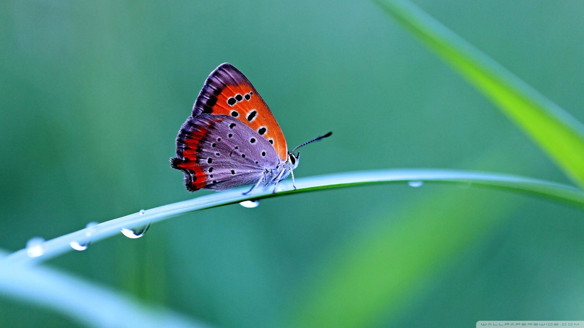 Butterfly In Nature Hd Wallpaper