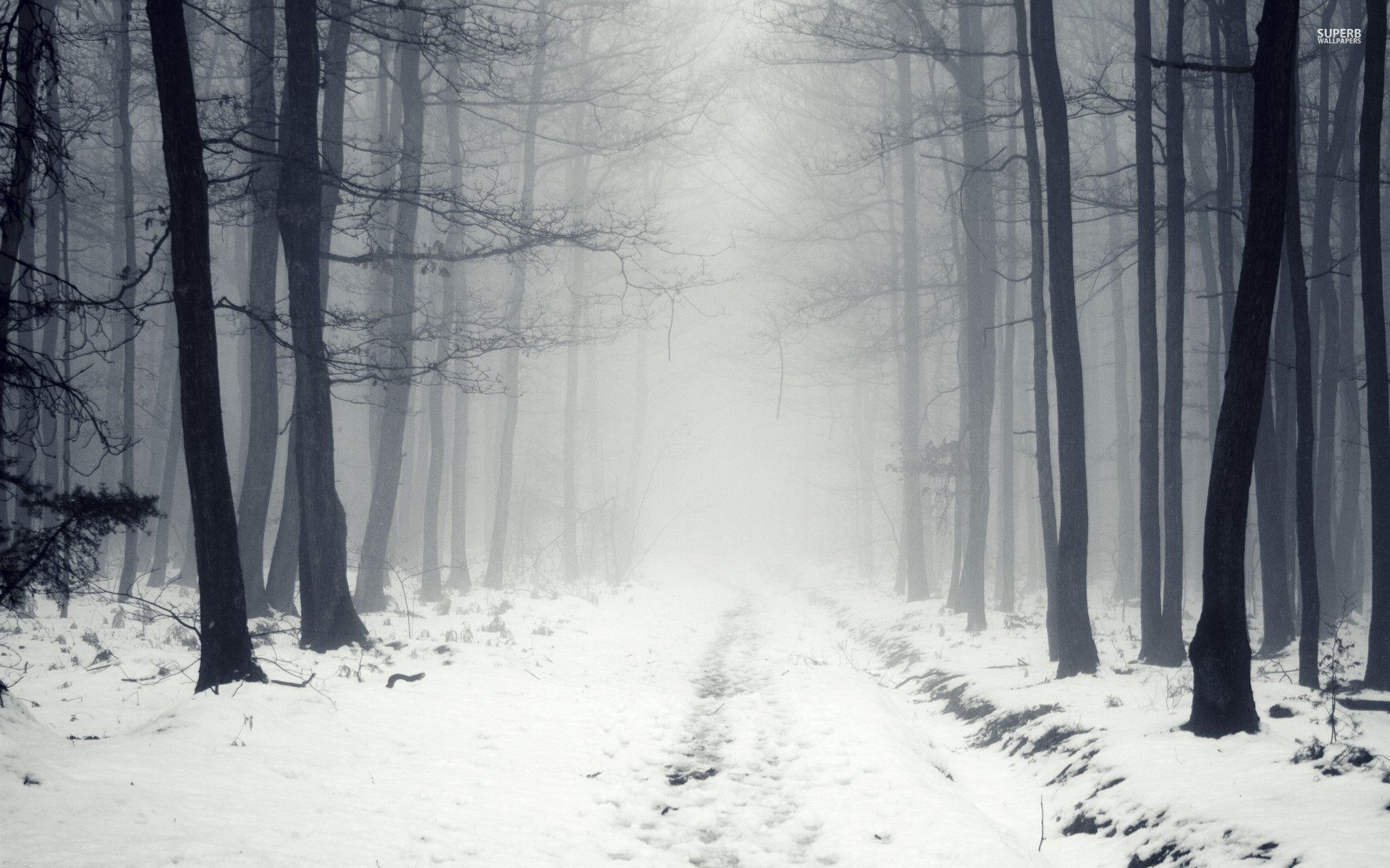 Snowy Path In The Foggy Forest 16783 Hd Wallpaper