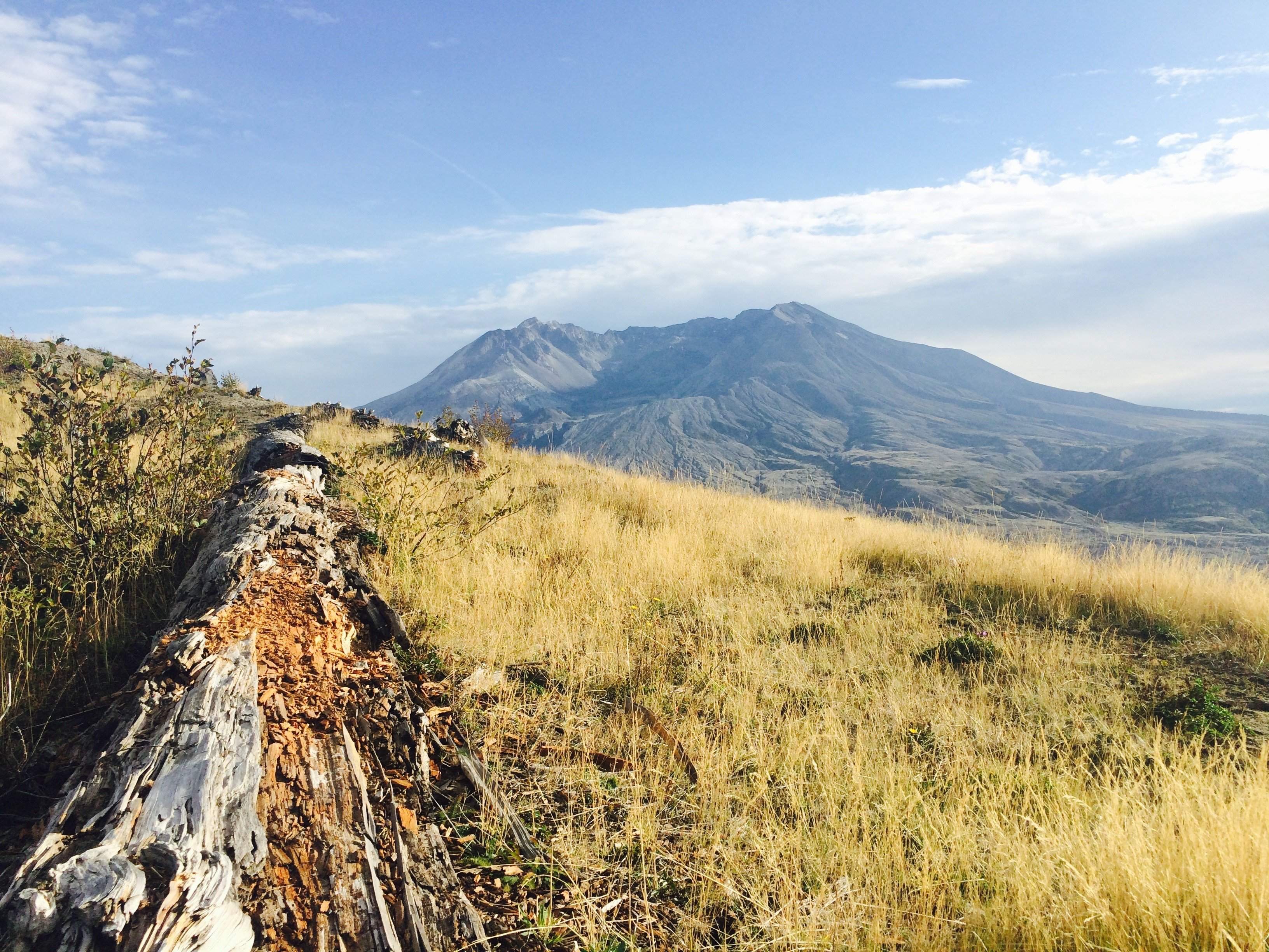Shattered Log Leading to the Force That Broke It Years Ago Mt St Helens Washington wallpaper